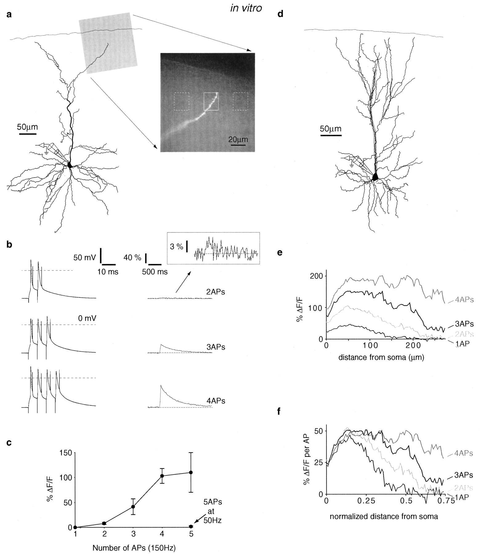 Supralinear Ca2+ Influx into Dendritic Tufts of Layer 2/3
