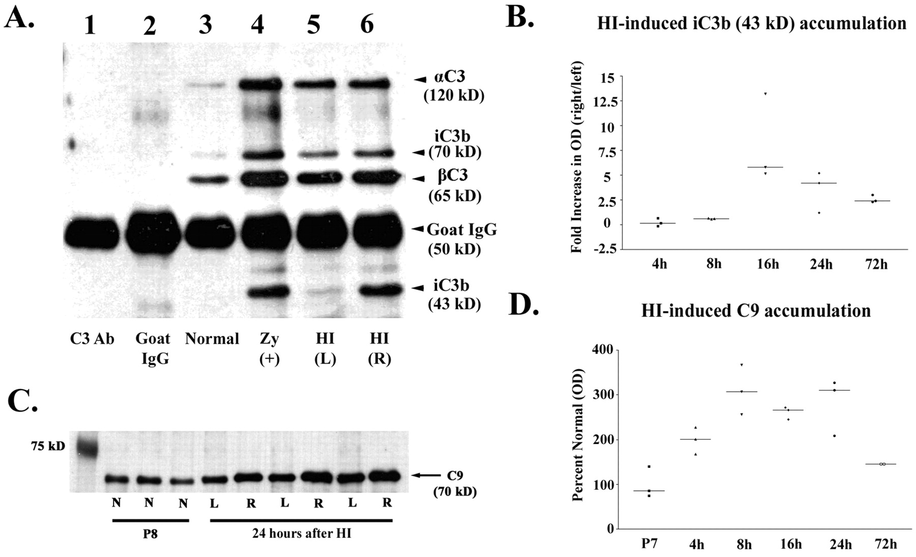 Complement Activation Contributes to Hypoxic-Ischemic Brain