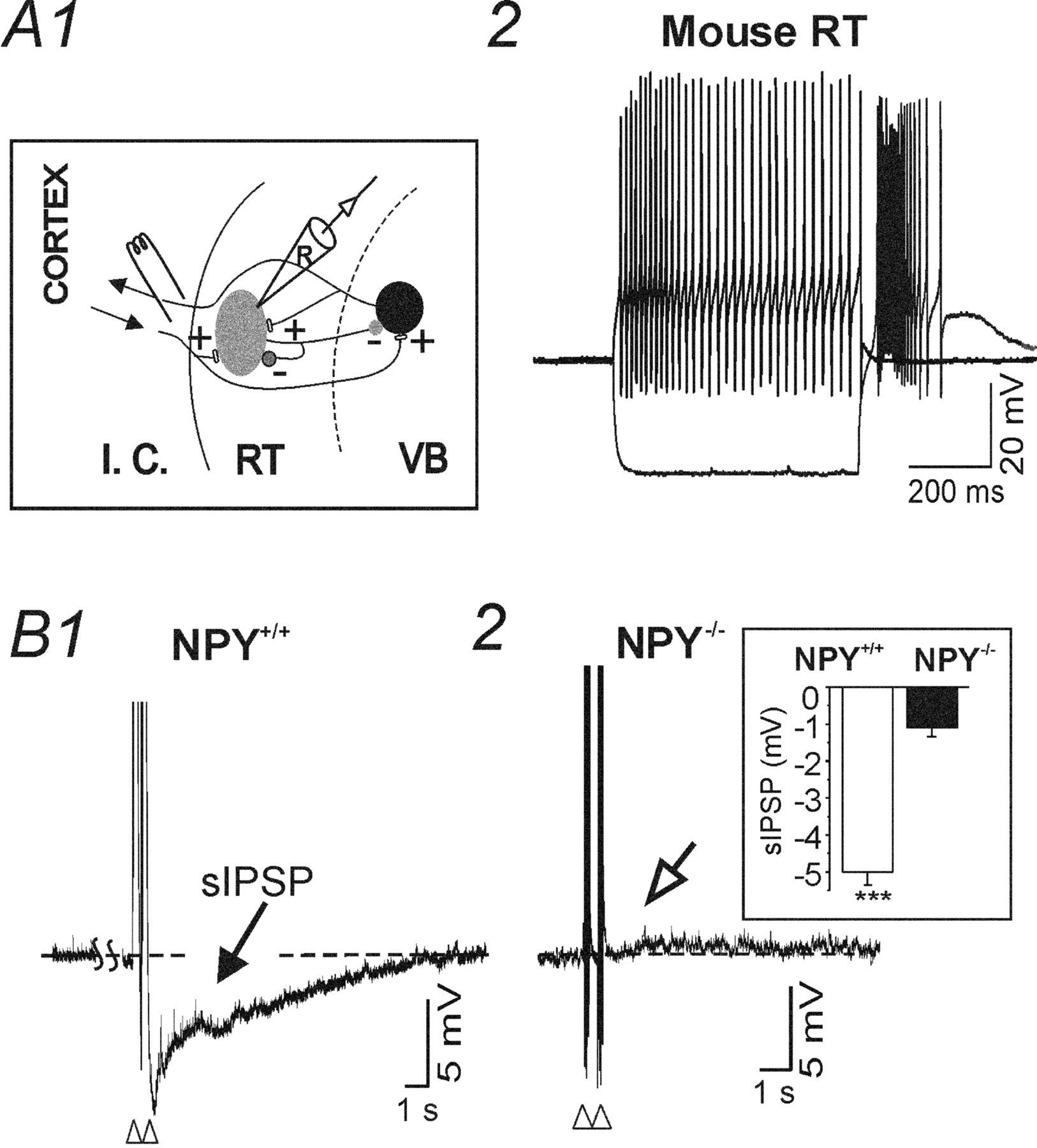Target Specific Neuropeptide Y Ergic Synaptic Inhibition And Its Circuit 363 36 Hour Watchdog Timer Circuits Designed By David A Download Figure