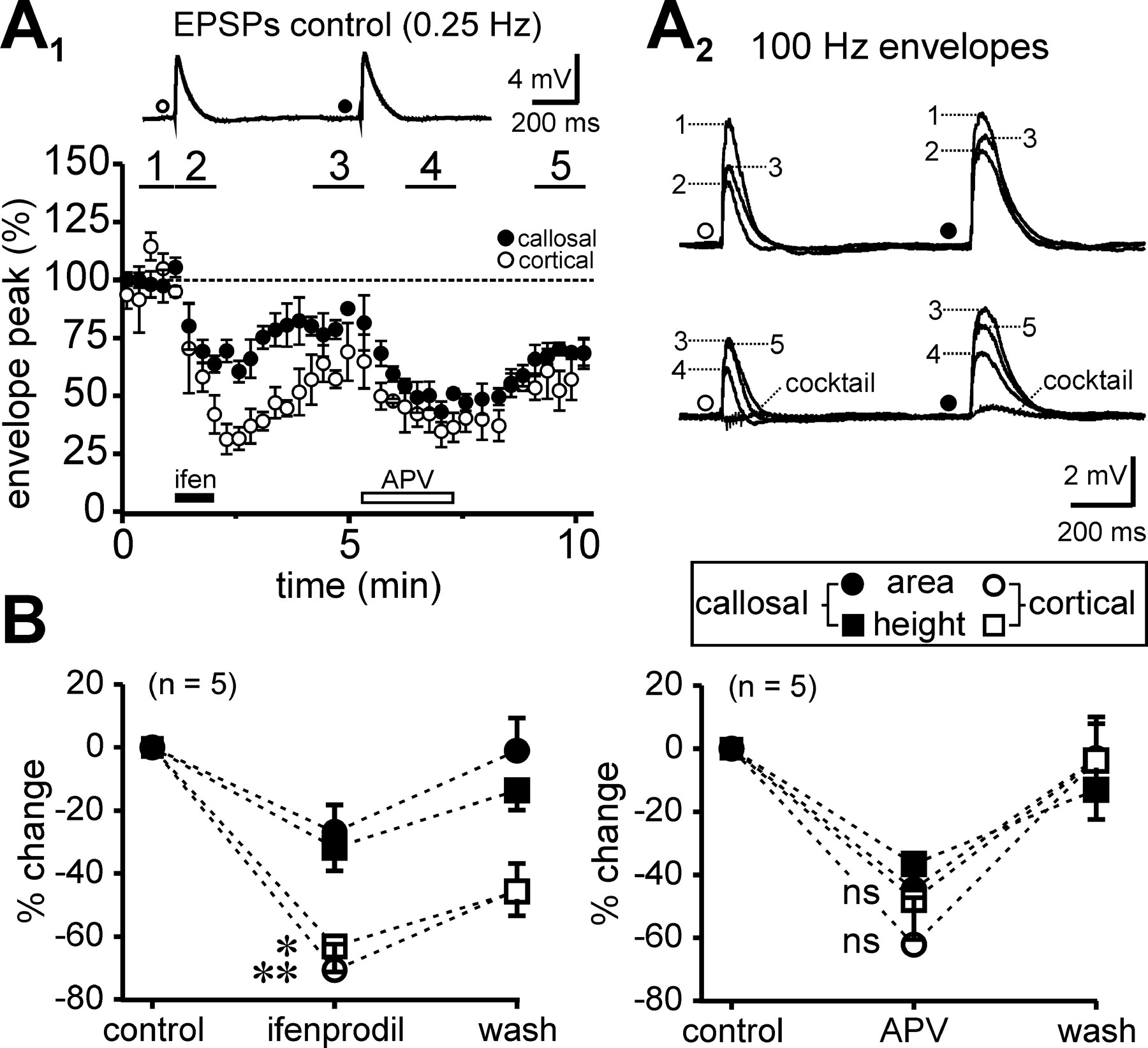 Pathway Specific Differences In Subunit Composition Of Synaptic Nmda Bipolar Input Long Term Integrator Download Figure
