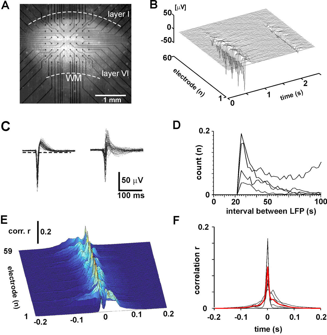 Neuronal Avalanches In Neocortical Circuits Journal Of Neuroscience Circuit Together With Eeg Diagram Simple Likewise Voltage Download Figure