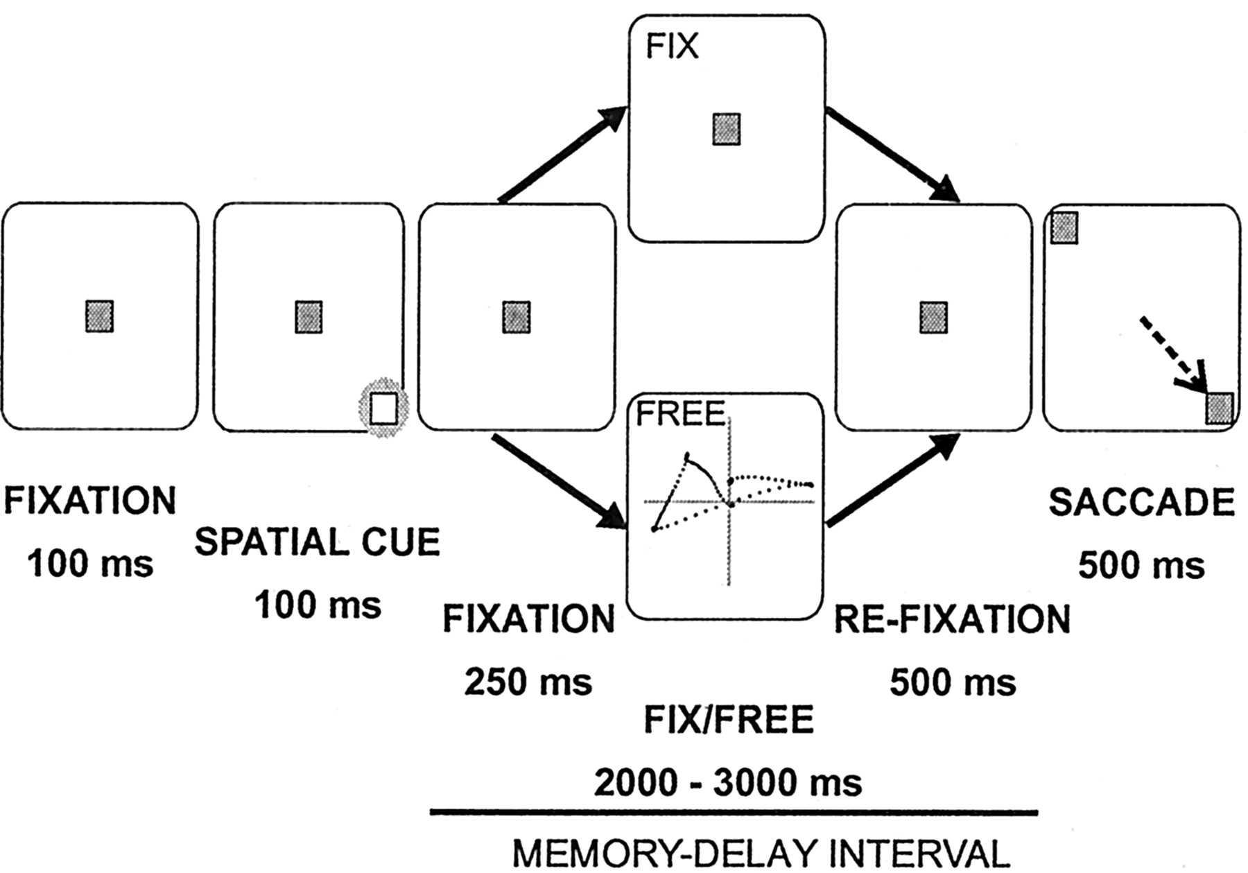 Effects of Spontaneous Eye Movements on Spatial Memory in
