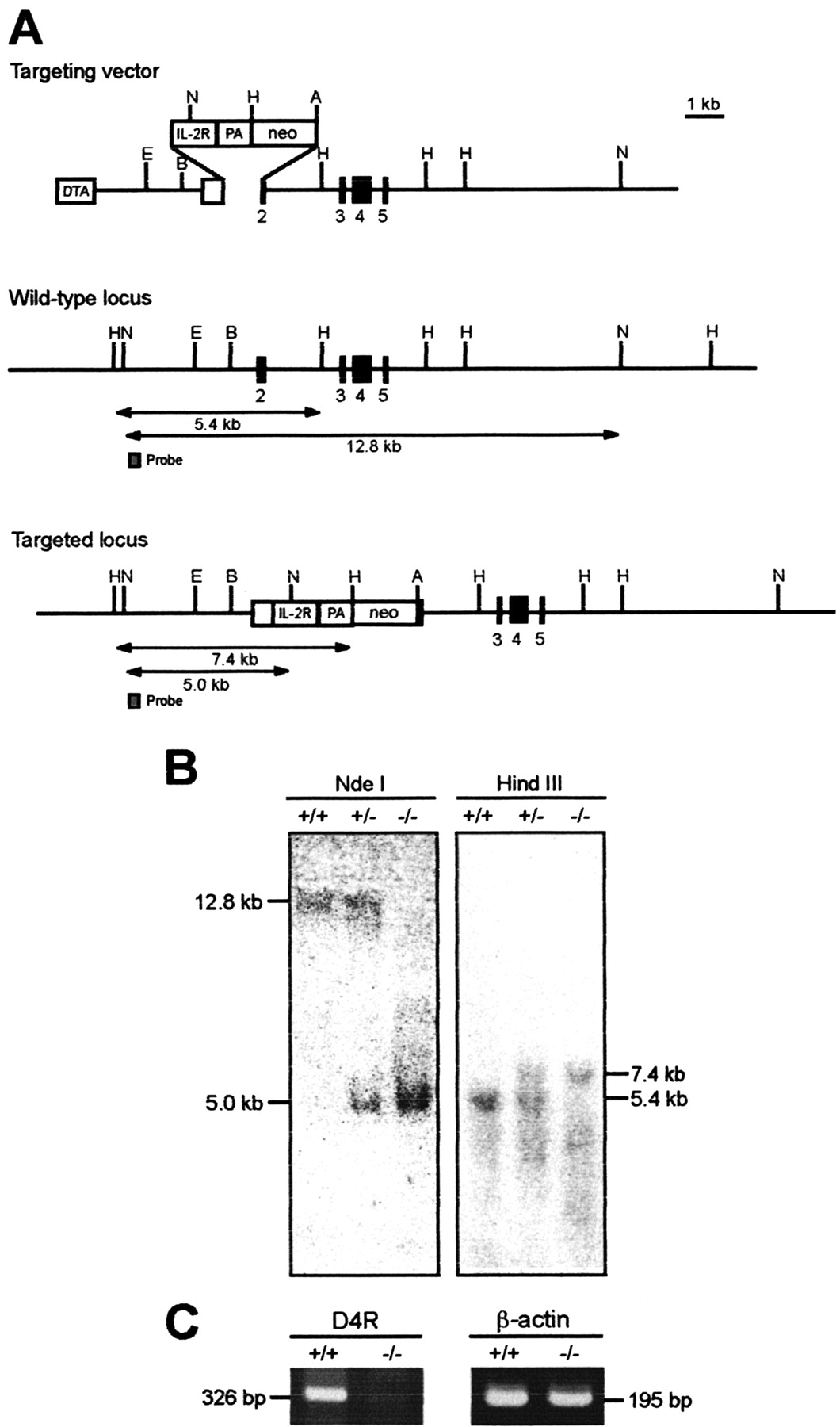 Dopamine D4 Receptor Induced Postsynaptic Inhibition Of Gabaergic Circuit Board From A Defunct Optical Computer Mouse Picture The Download Figure