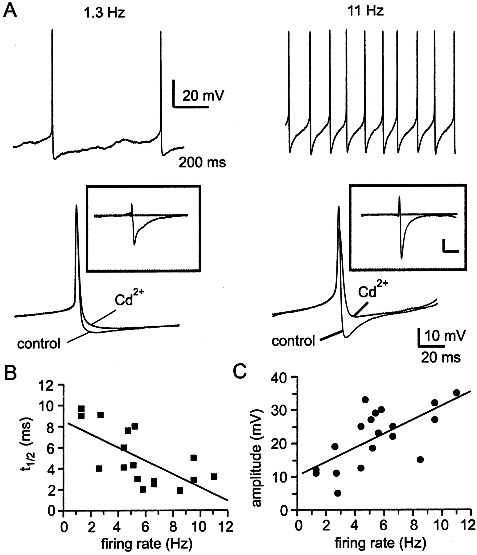 Afterhyperpolarization Regulates Firing Rate In Neurons Of The Circuit A Capacitive Discharge Box Resembles This Download Figure