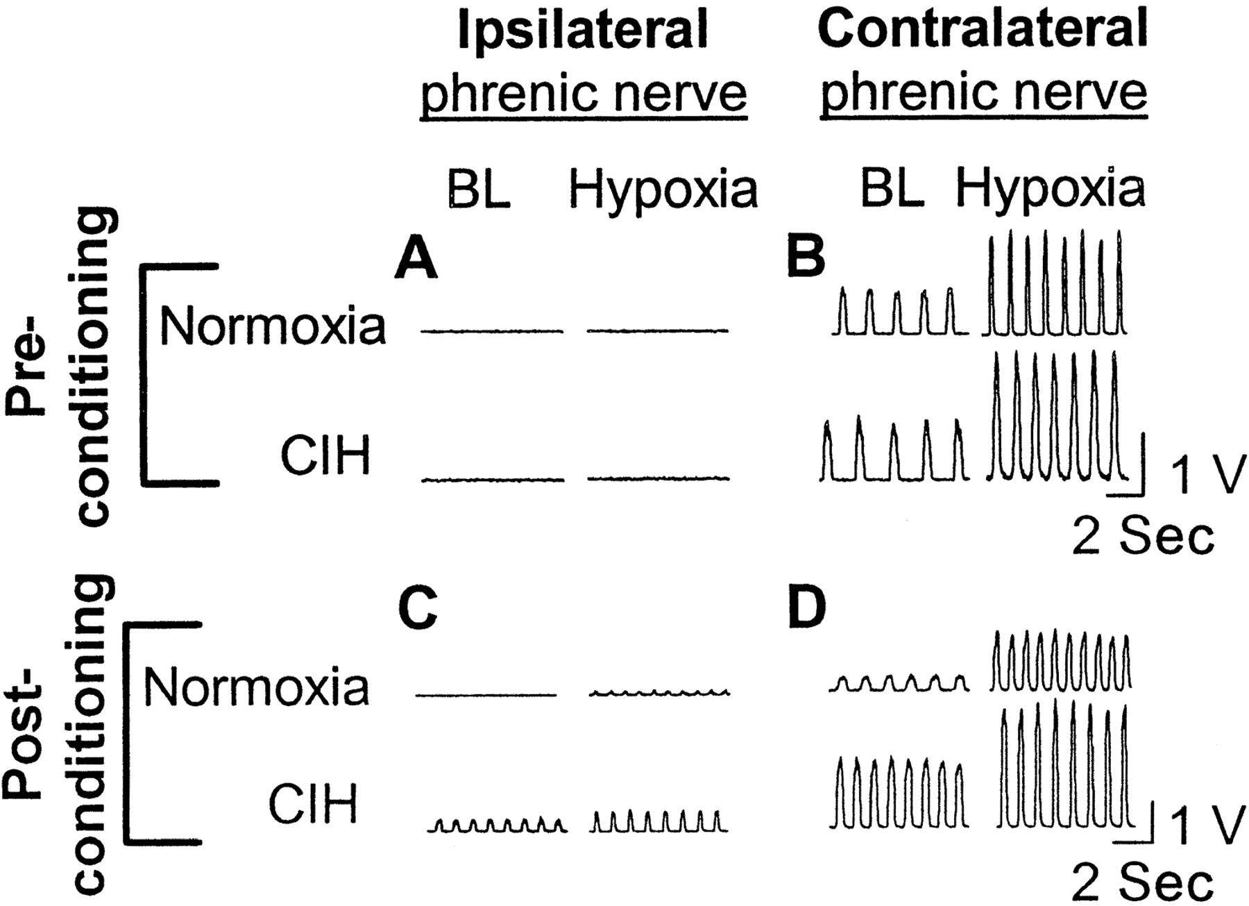 Synaptic Pathways to Phrenic Motoneurons Are Enhanced by