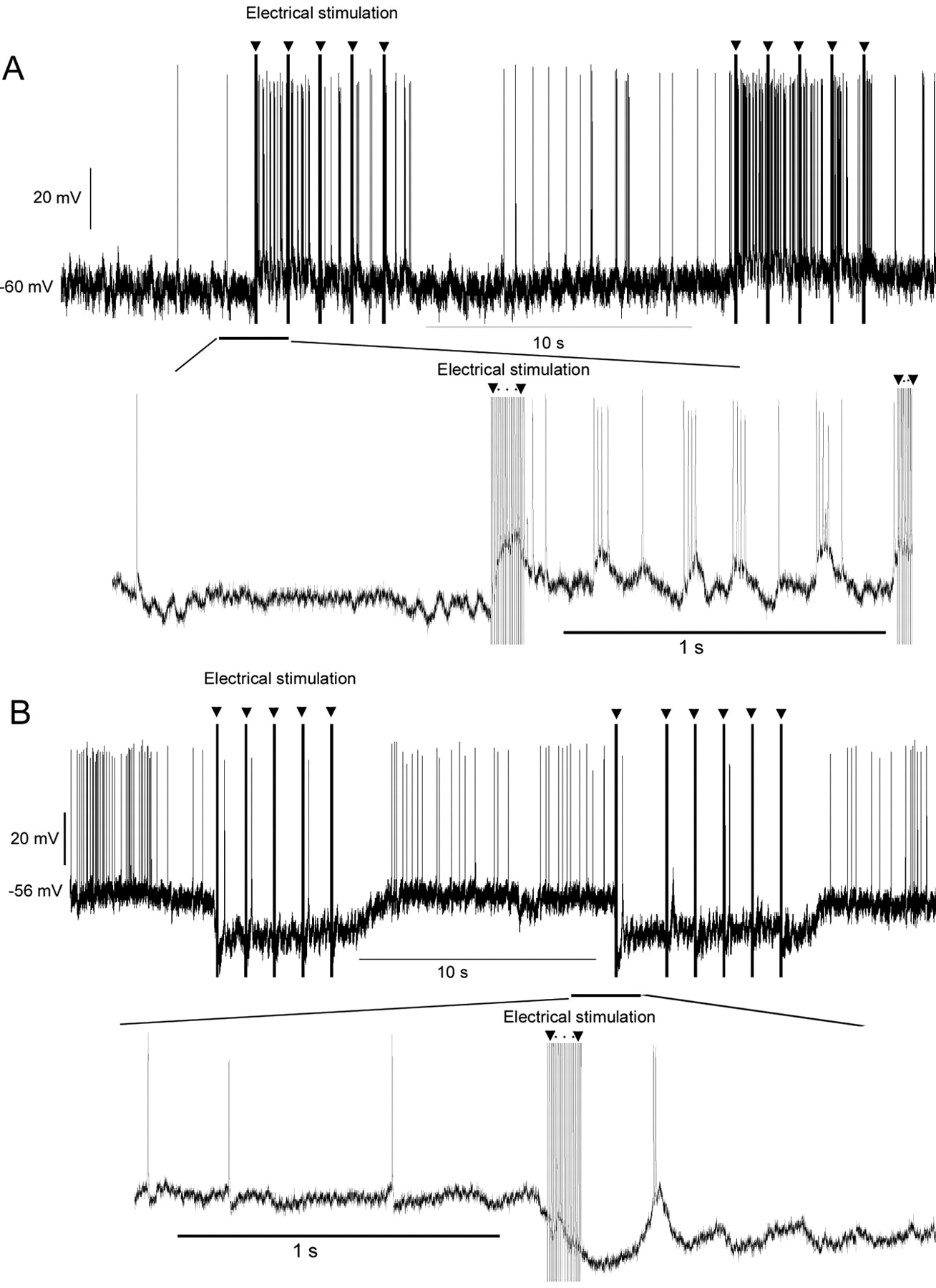 Corticofugal Gating Of Auditory Information In The Thalamus An Mgb Turn Signal Wiring Diagram Download Figure