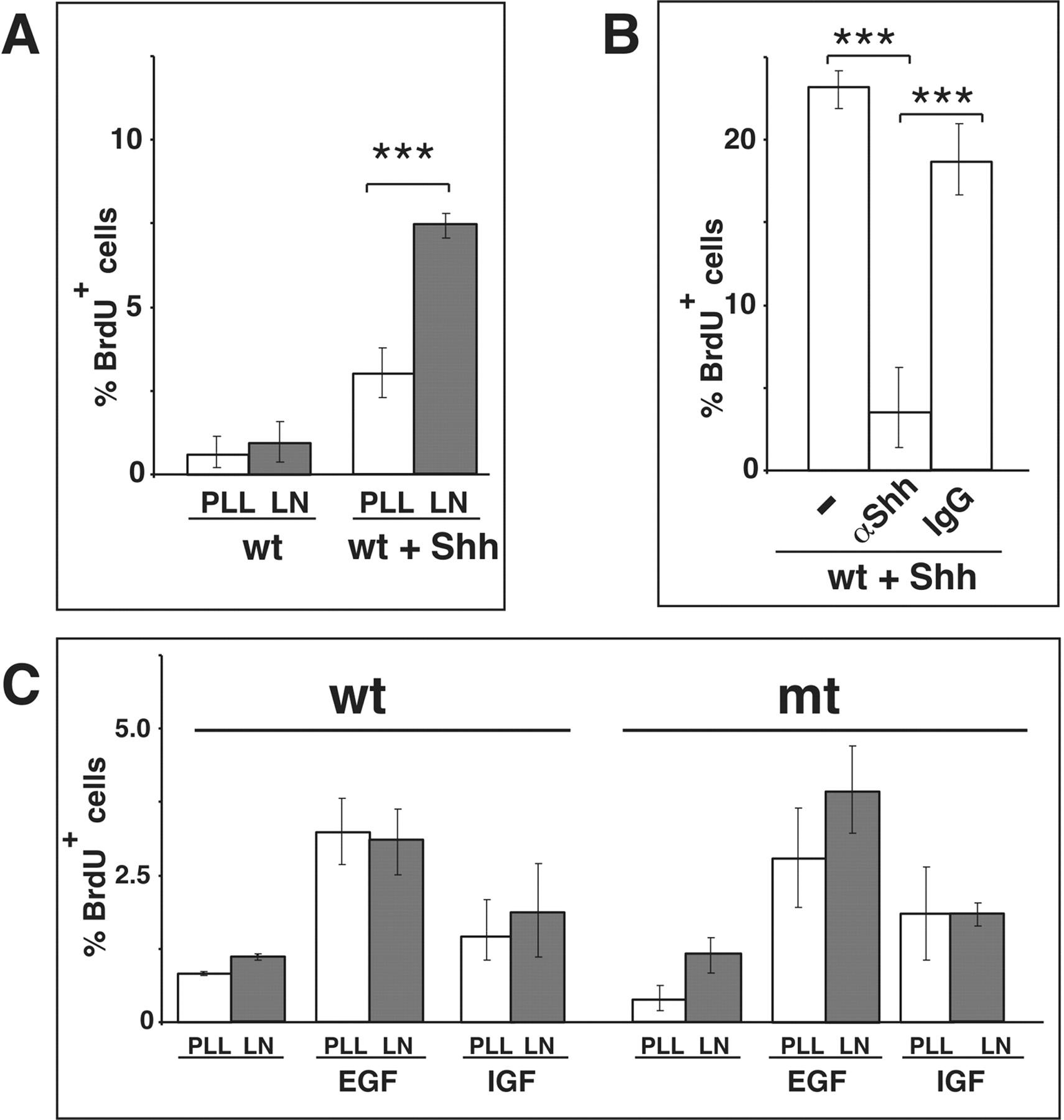 1 Integrins Are Critical For Cerebellar Granule Cell Precursor 1996 B100 Fuse Box Diagram Download Figure