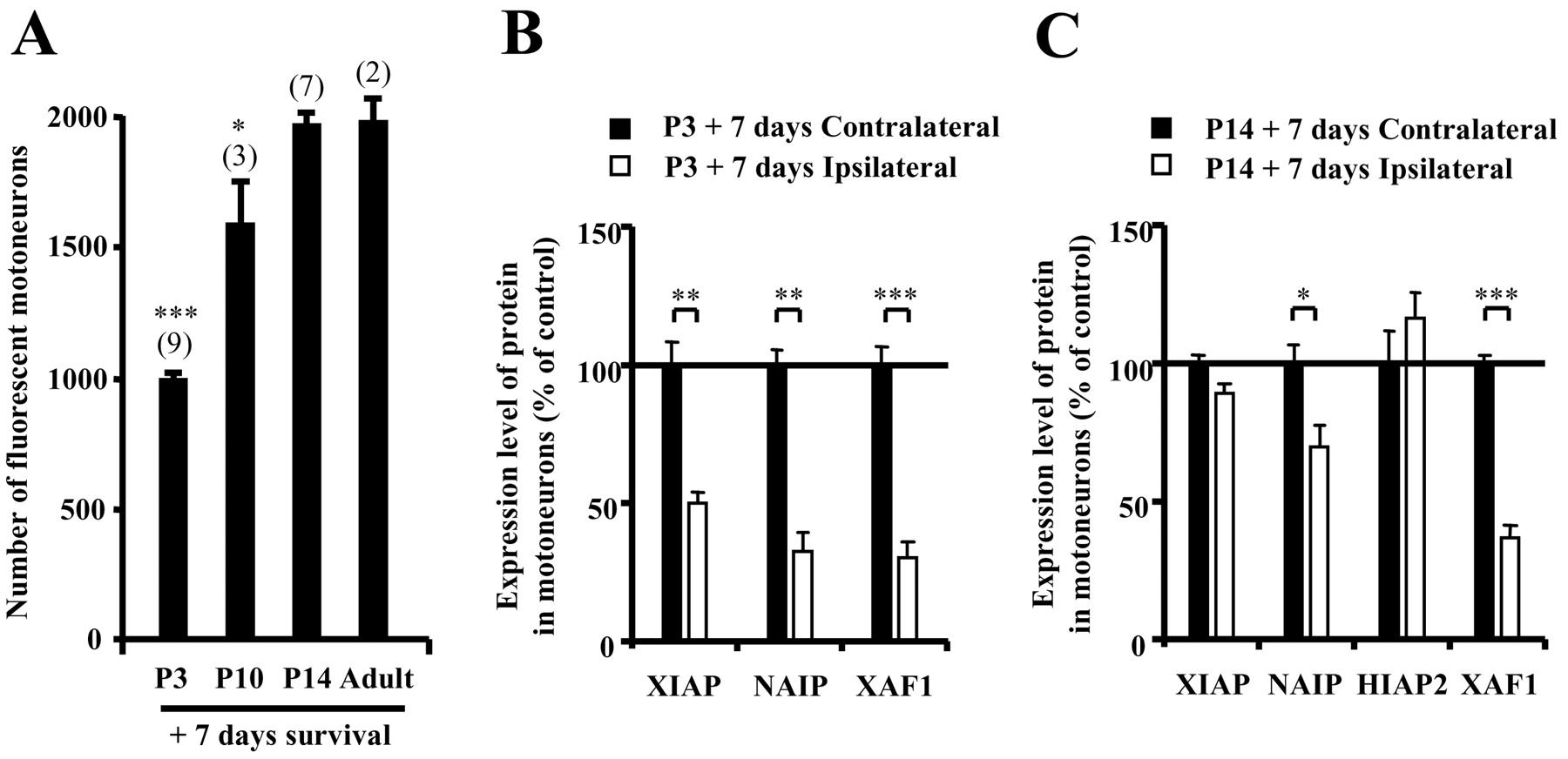 Motoneuron Resistance to Apoptotic Cell Death In Vivo Correlates