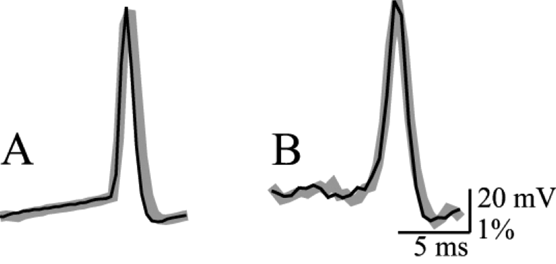 Voltage Imaging from Dendrites of Mitral Cells: EPSP Attenuation and