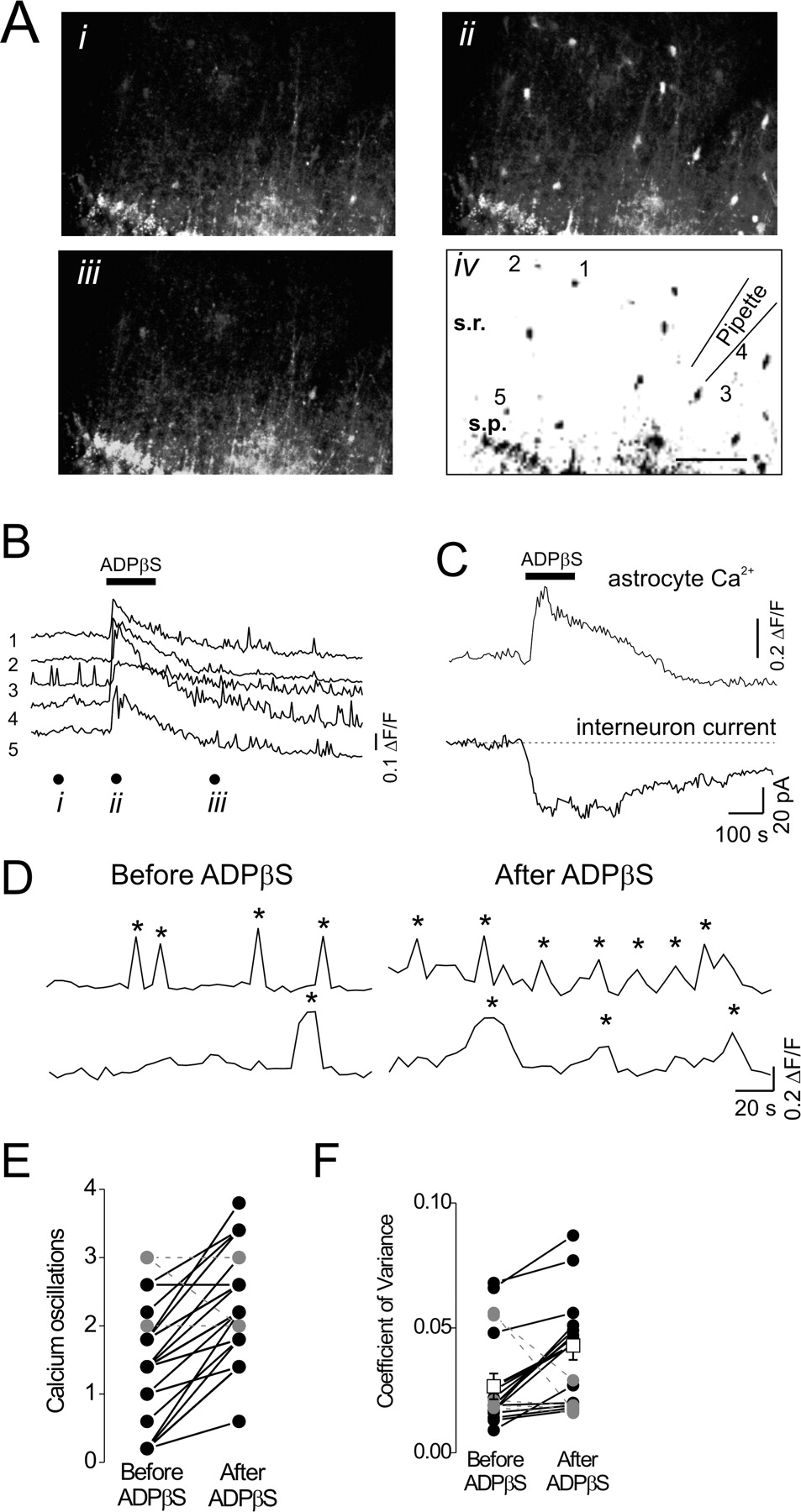 Atp Excites Interneurons And Astrocytes To Increase Synaptic R Rc Firing Circuit Diagram Download Figure