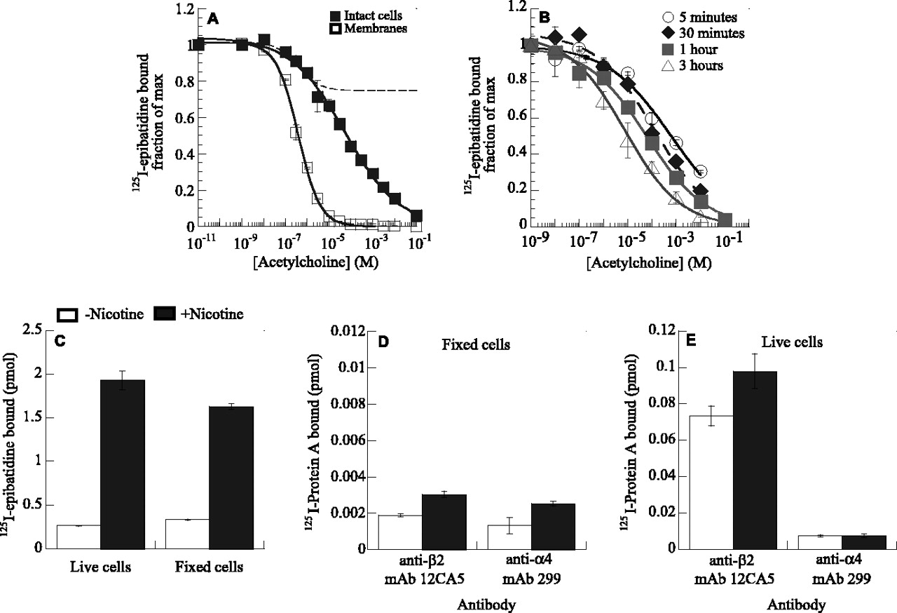 Chronic Nicotine Exposure Upregulates Nicotinic Receptors by