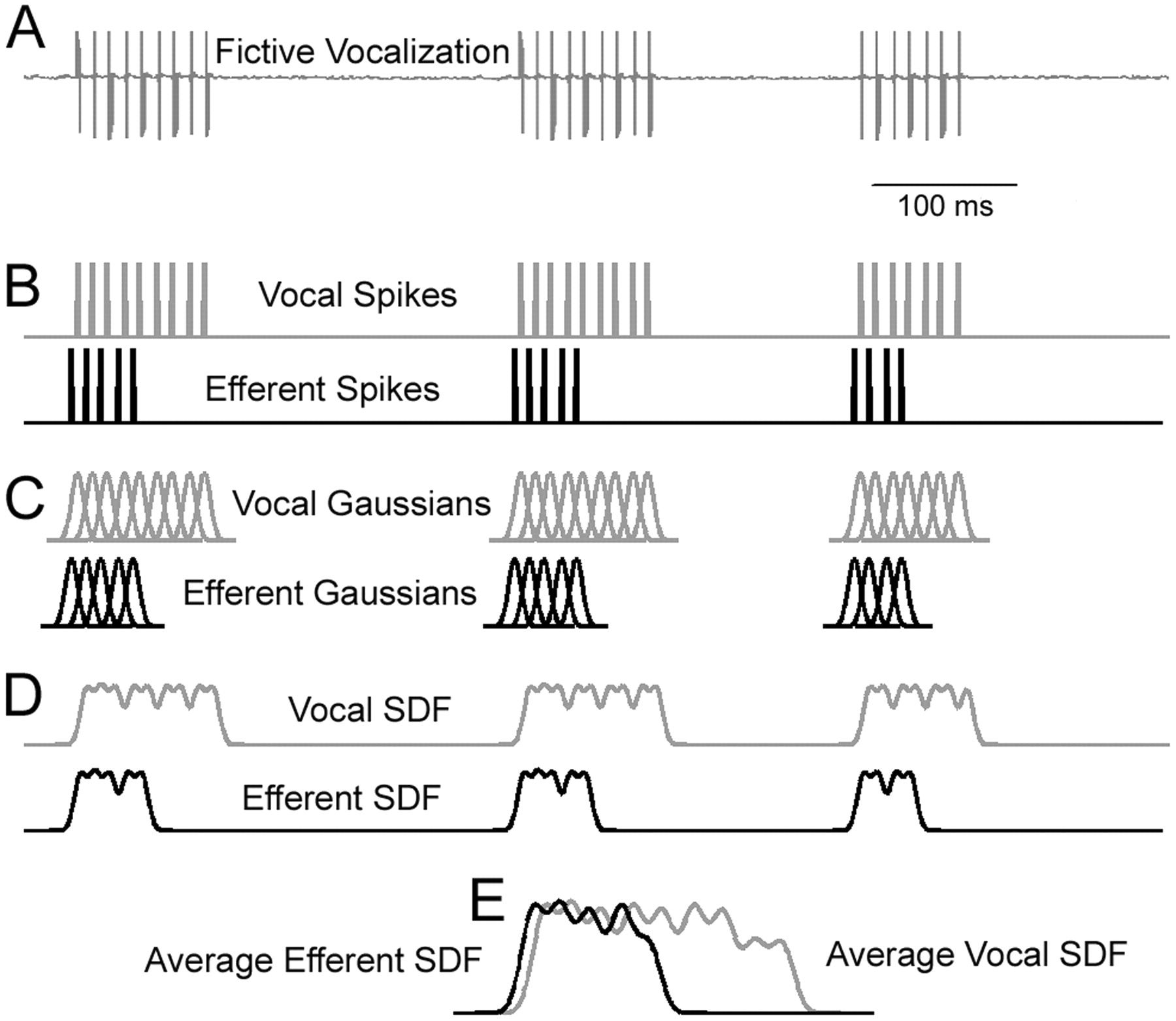 Vocal Pathways Modulate Efferent Neurons To The Inner Ear And