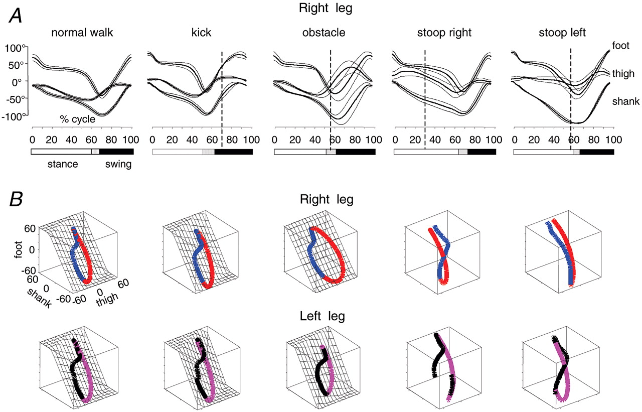 Coordination of Locomotion with Voluntary Movements in