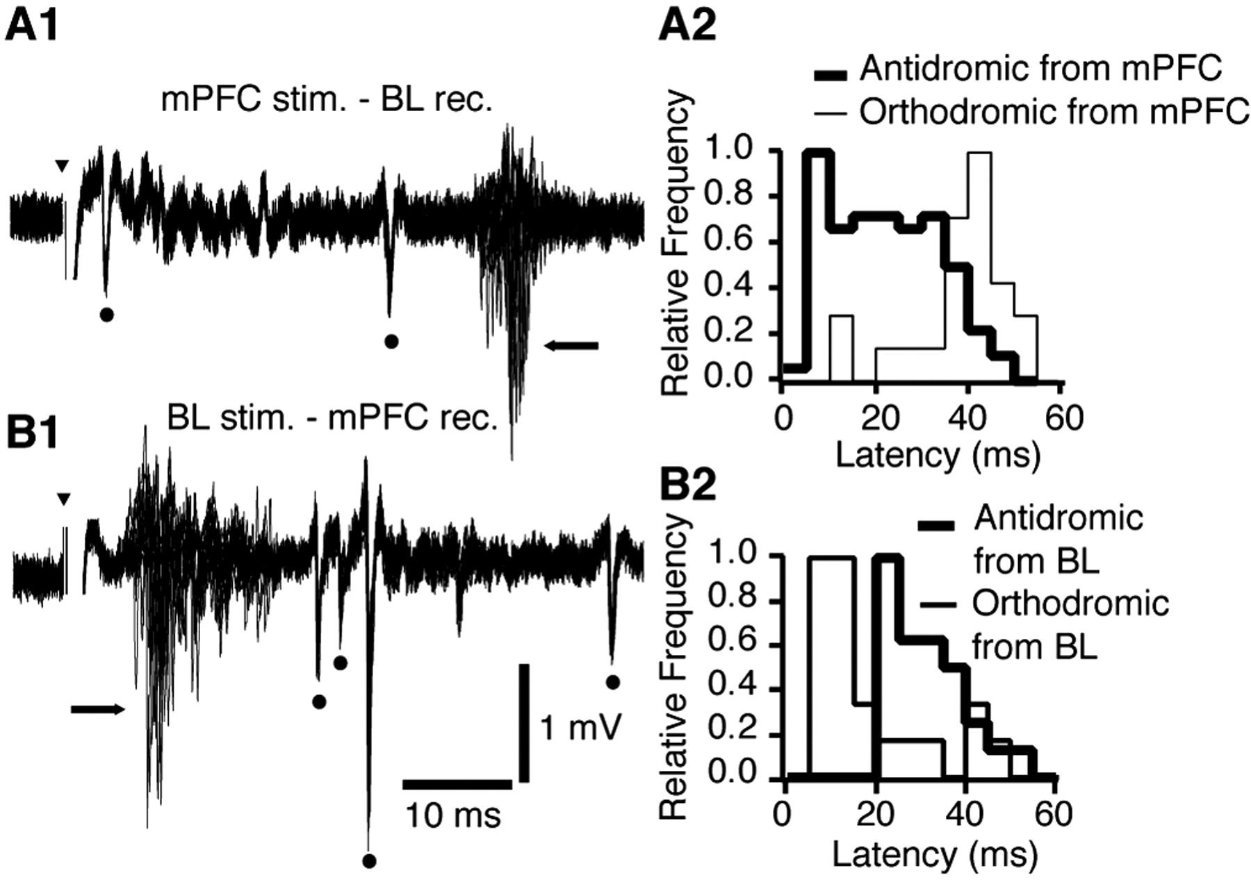 prefrontal control of the amygdala