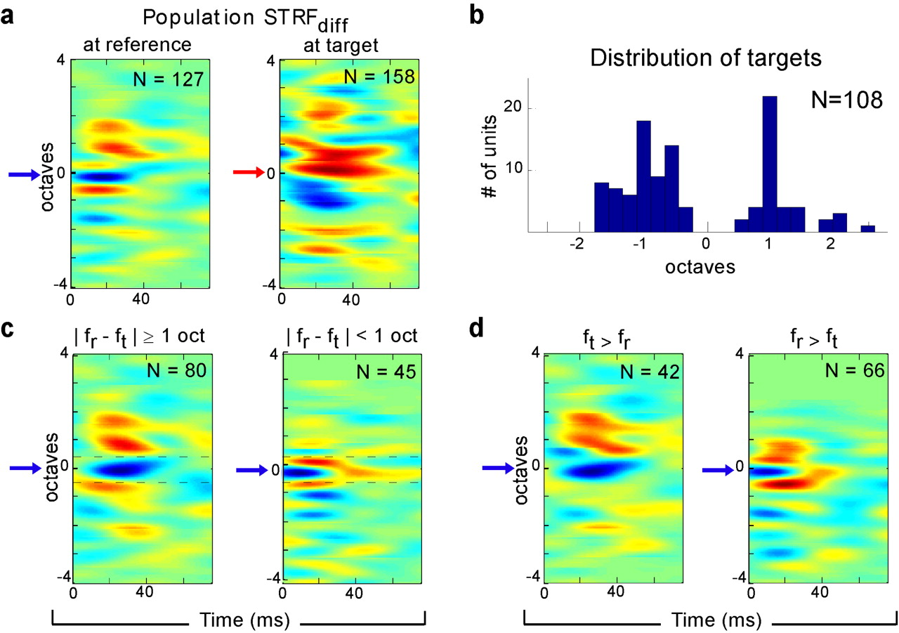 Differential Dynamic Plasticity of A1 Receptive Fields during