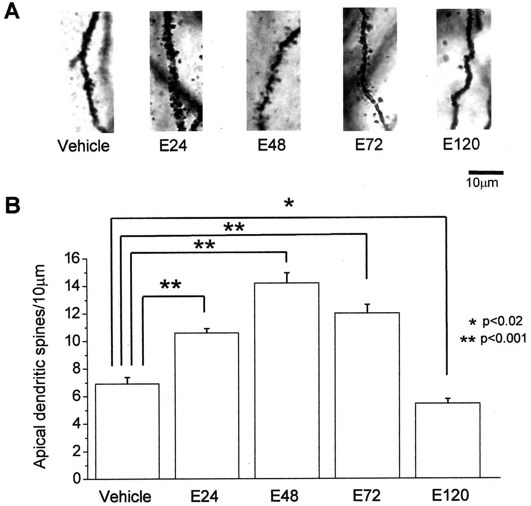 Estrogen Induced Increase In The Magnitude Of Long Term Potentiation