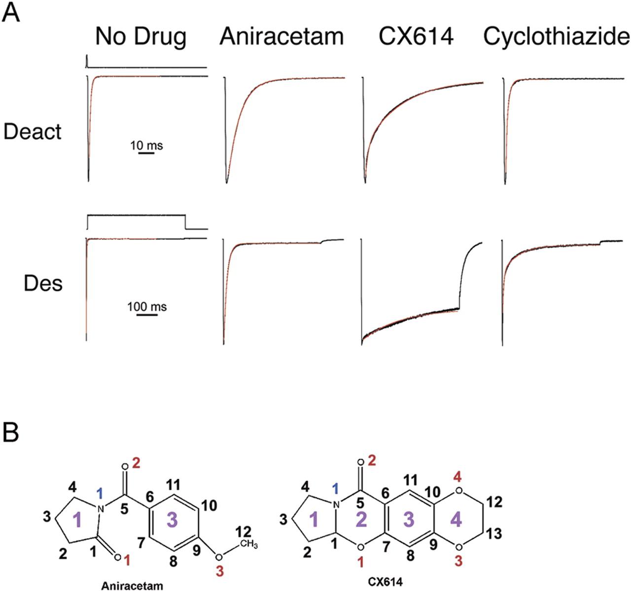 Mechanism Of Positive Allosteric Modulators Acting On Ampa Receptors