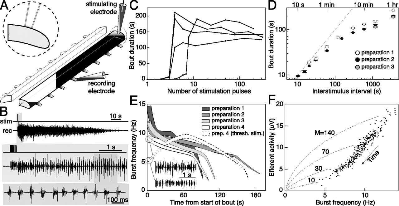 Mechanisms Of Rhythm Generation In A Spinal Locomotor Network