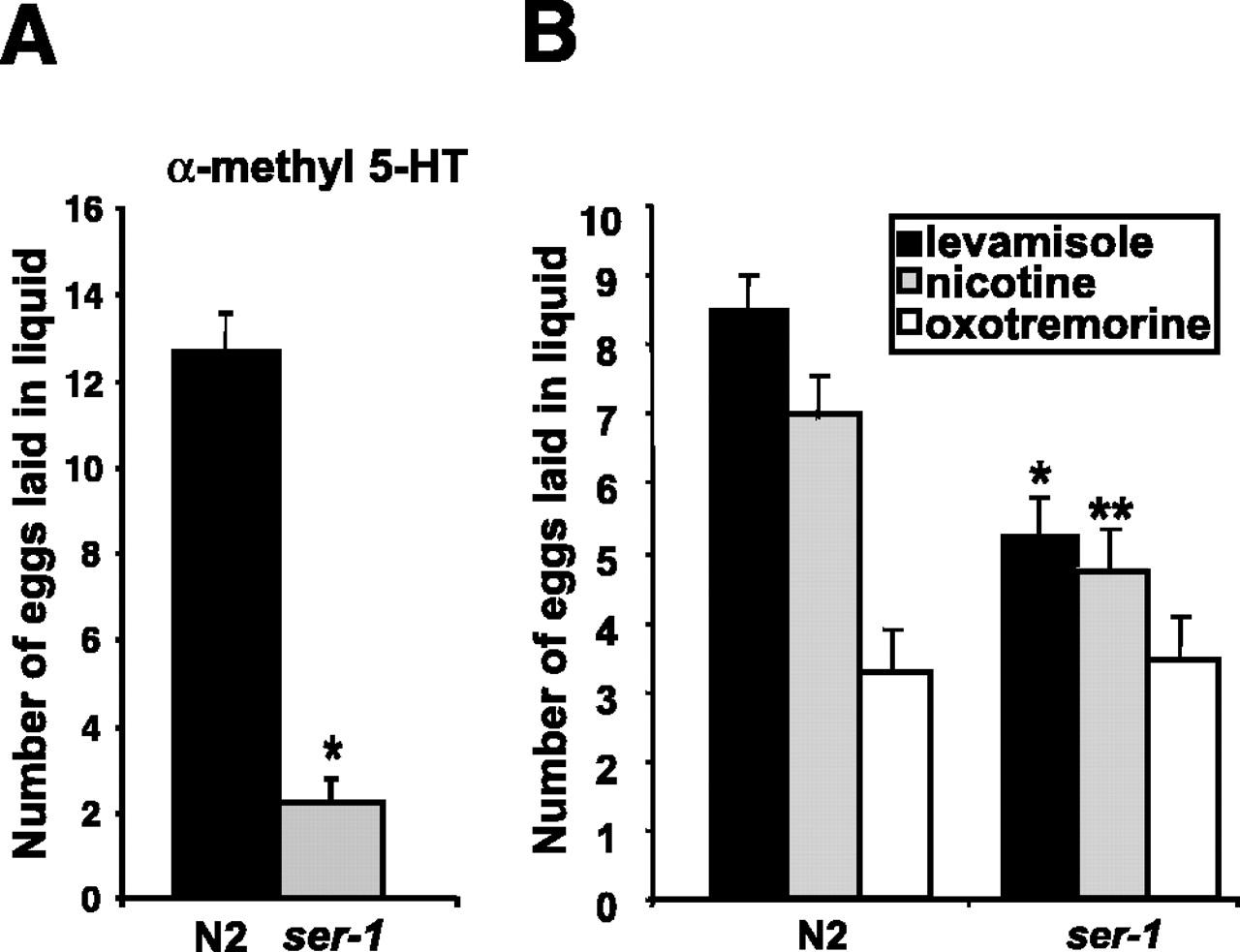The G-Protein-Coupled Serotonin Receptor SER-1 Regulates Egg