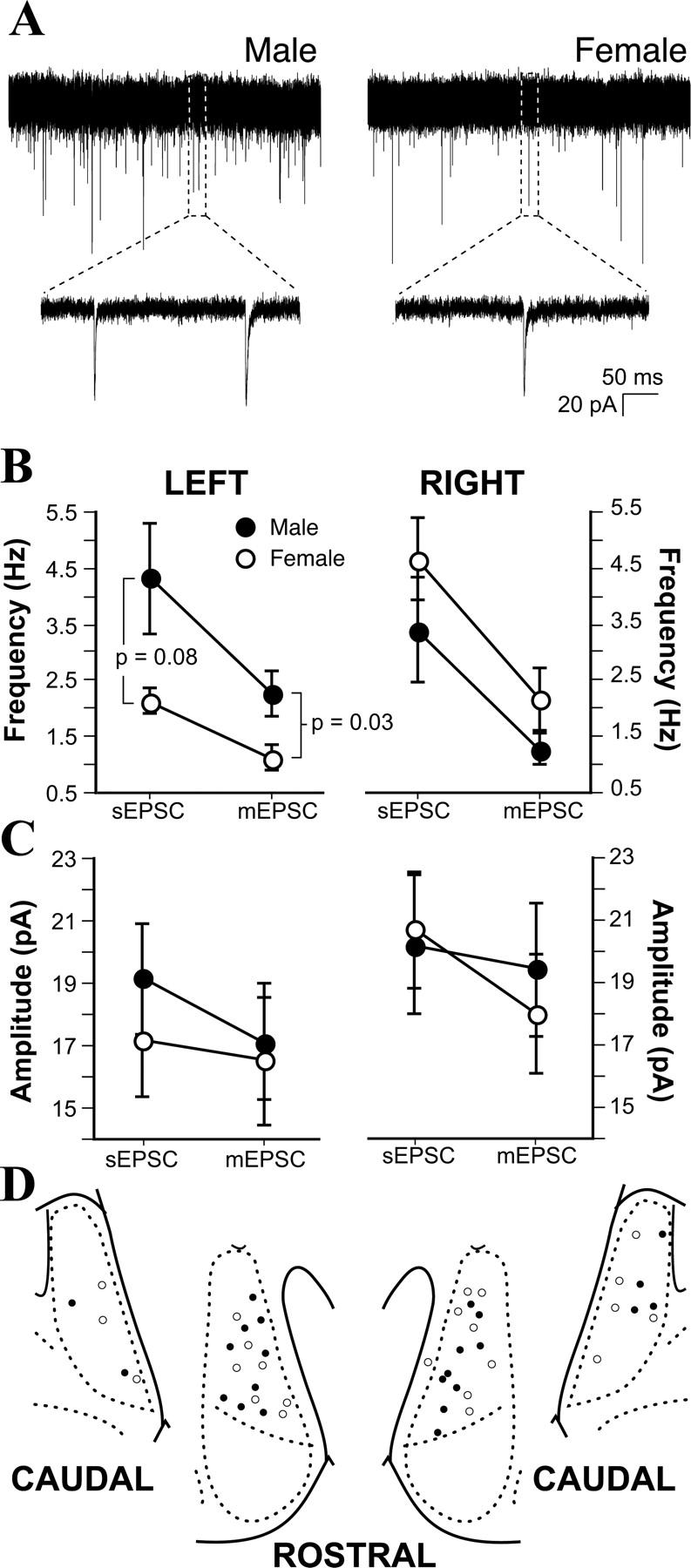 Optical reflexes determine sexuality