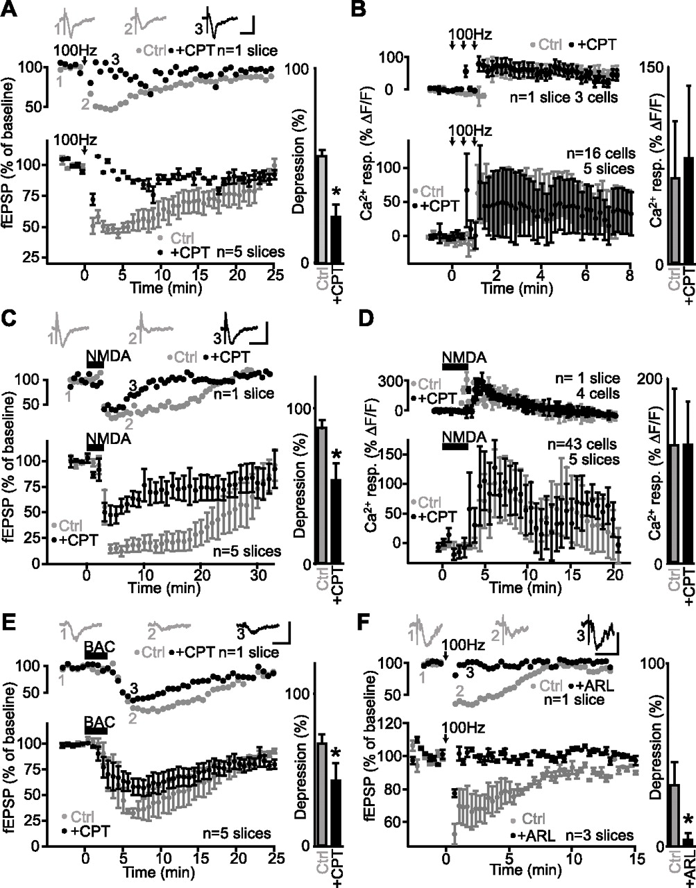 Gabaergic Network Activation Of Glial Cells Underlies Hippocampal R And Rc Firing Circuit Diagram Download Figure