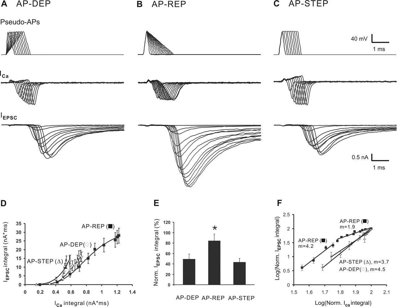 Amplitude And Kinetics Of Action Potential Evoked Ca2 Current And