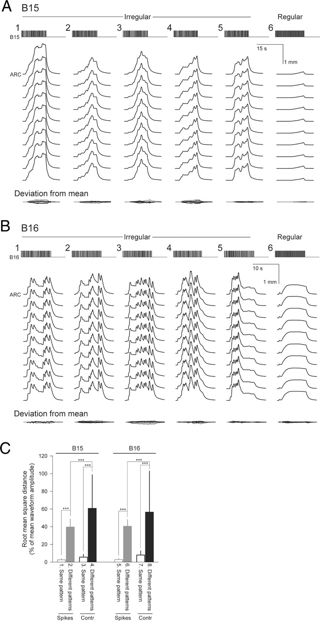 variability of motor neuron spike timing maintains and