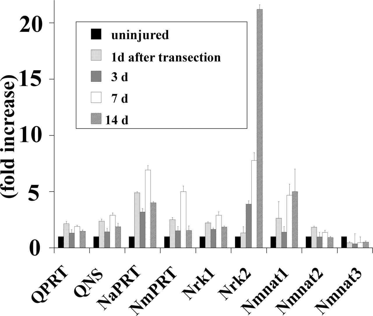 Stimulation of Nicotinamide Adenine Dinucleotide