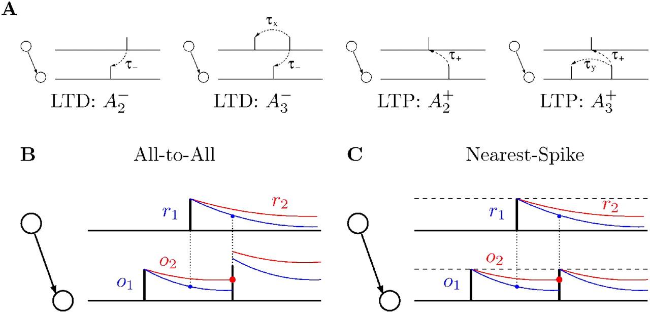 https://www.jneurosci.org/content/jneuro/26/38/9673/F1.large.jpg?width=800&height=600&carousel=1