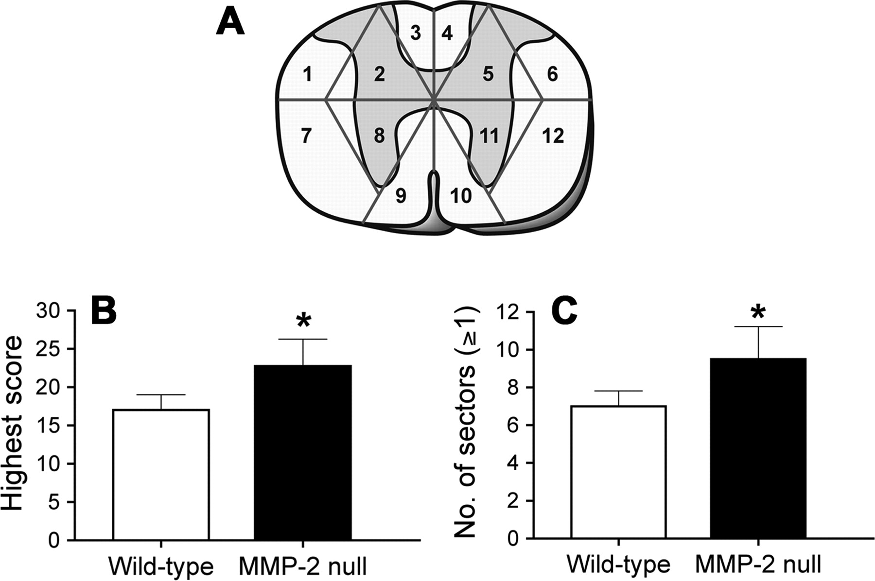 Matrix Metalloproteinase-2 Facilitates Wound Healing