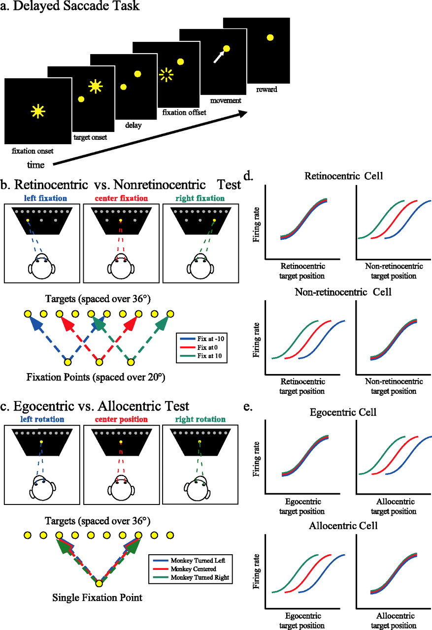Allocentric Spatial Referencing of Neuronal Activity in