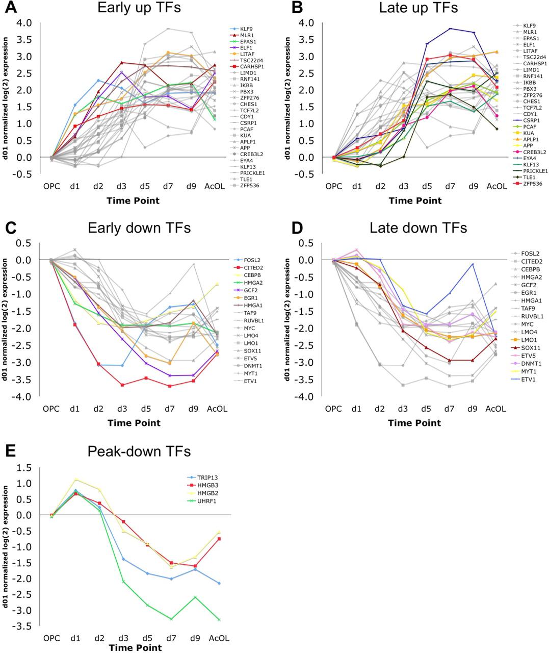 Functional Genomic Analysis of Oligodendrocyte