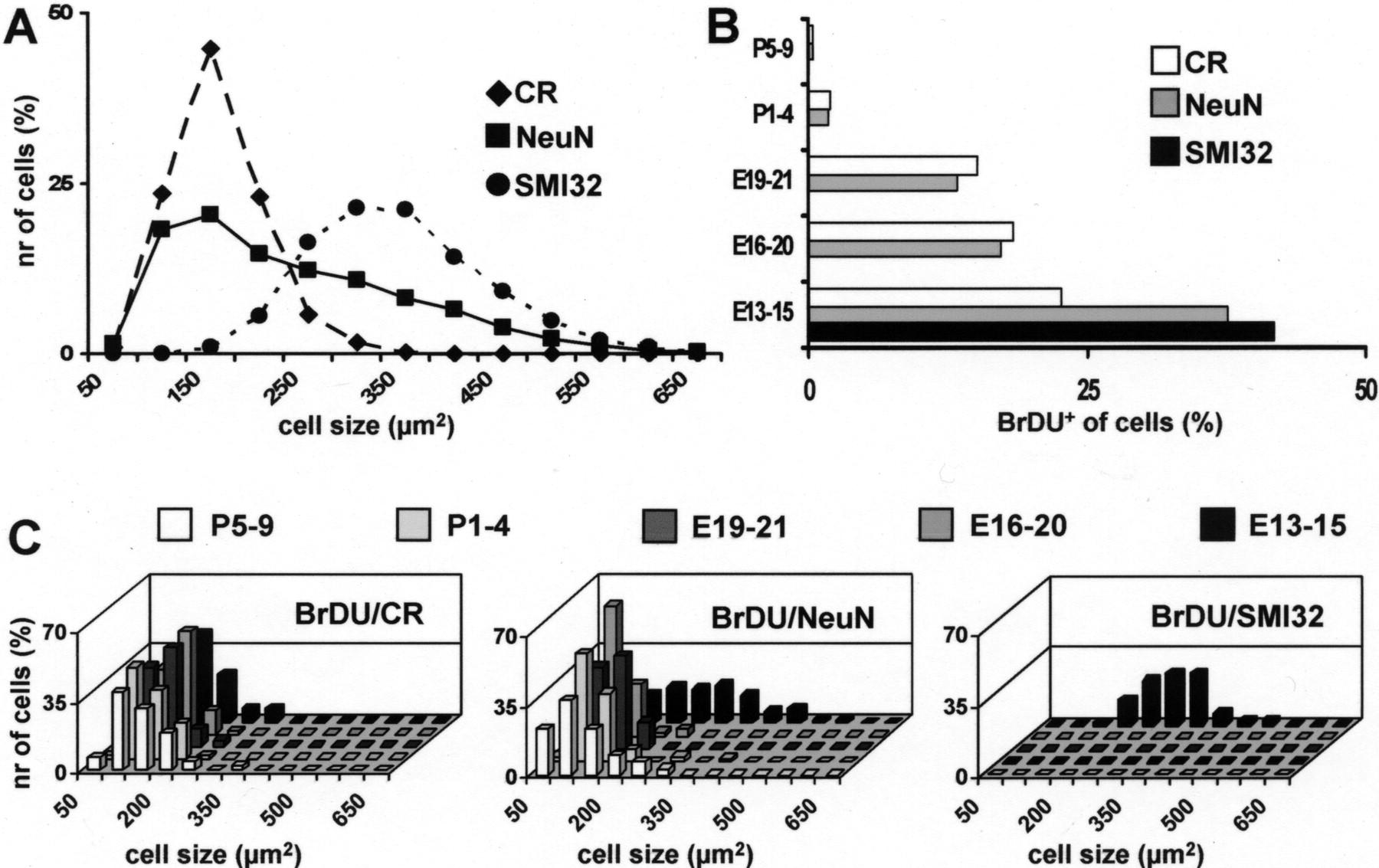 Different Types Of Cerebellar Gabaergic Interneurons Originate From 1996 B100 Fuse Box Diagram Download Figure