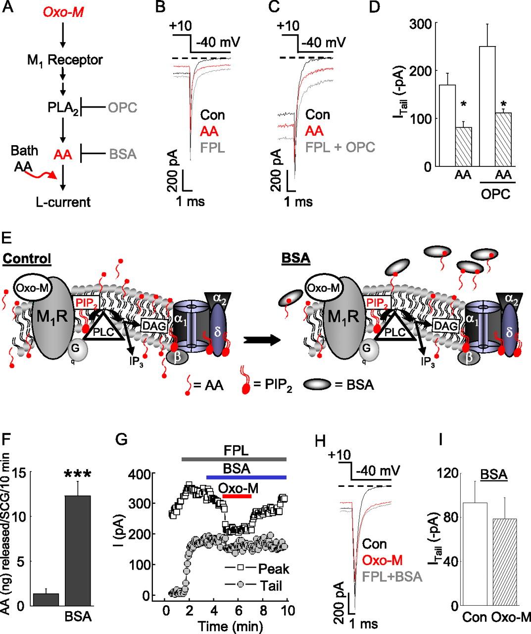 Correction For Liu Et Al M1 Muscarinic Receptors Inhibit L Type