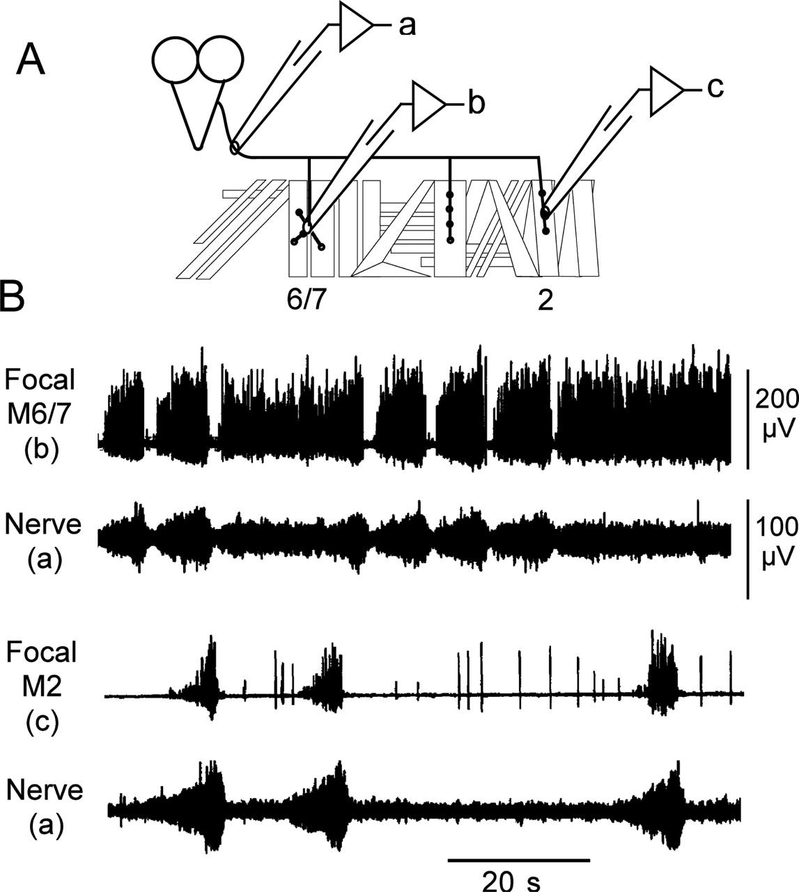 Coordination And Modulation Of Locomotion Pattern Generators In Wire Size Chart Addition Baldwin Organ Lifier Schematics On 200 Download Figure