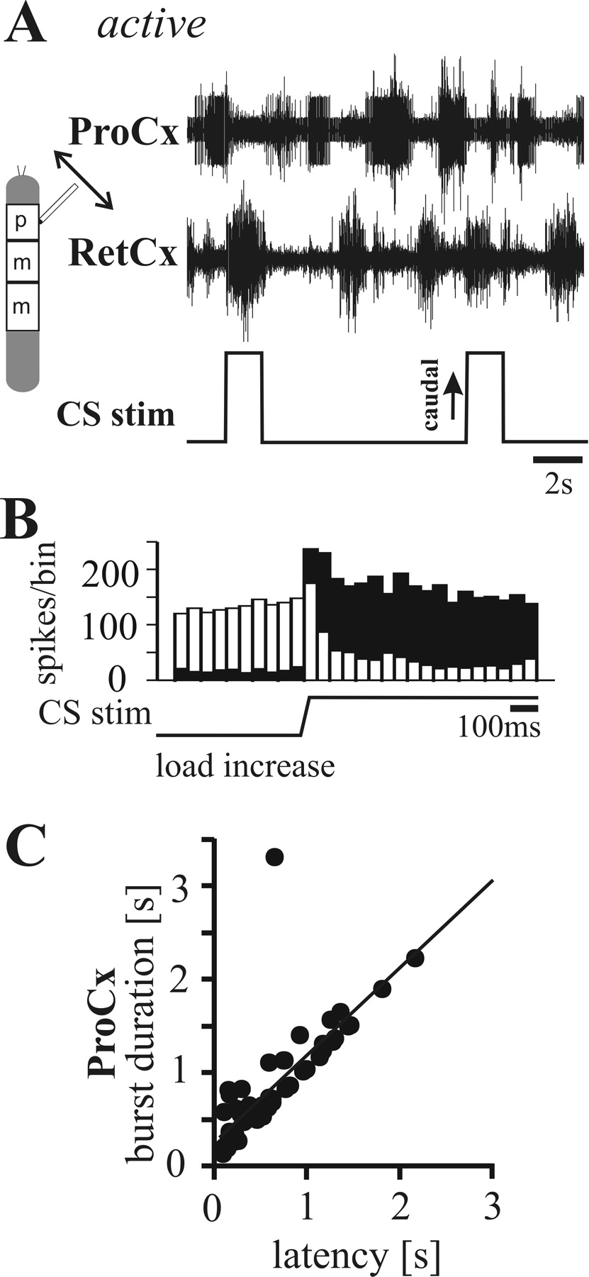 Segment Specificity of Load Signal Processing Depends on Walking ...