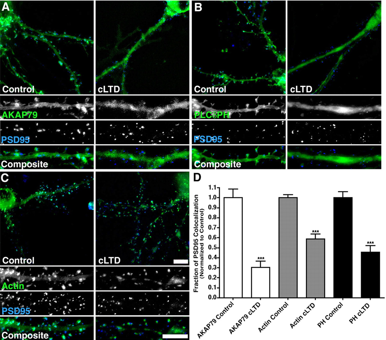 Phospholipase C Is Required for Changes in Postsynaptic Structure