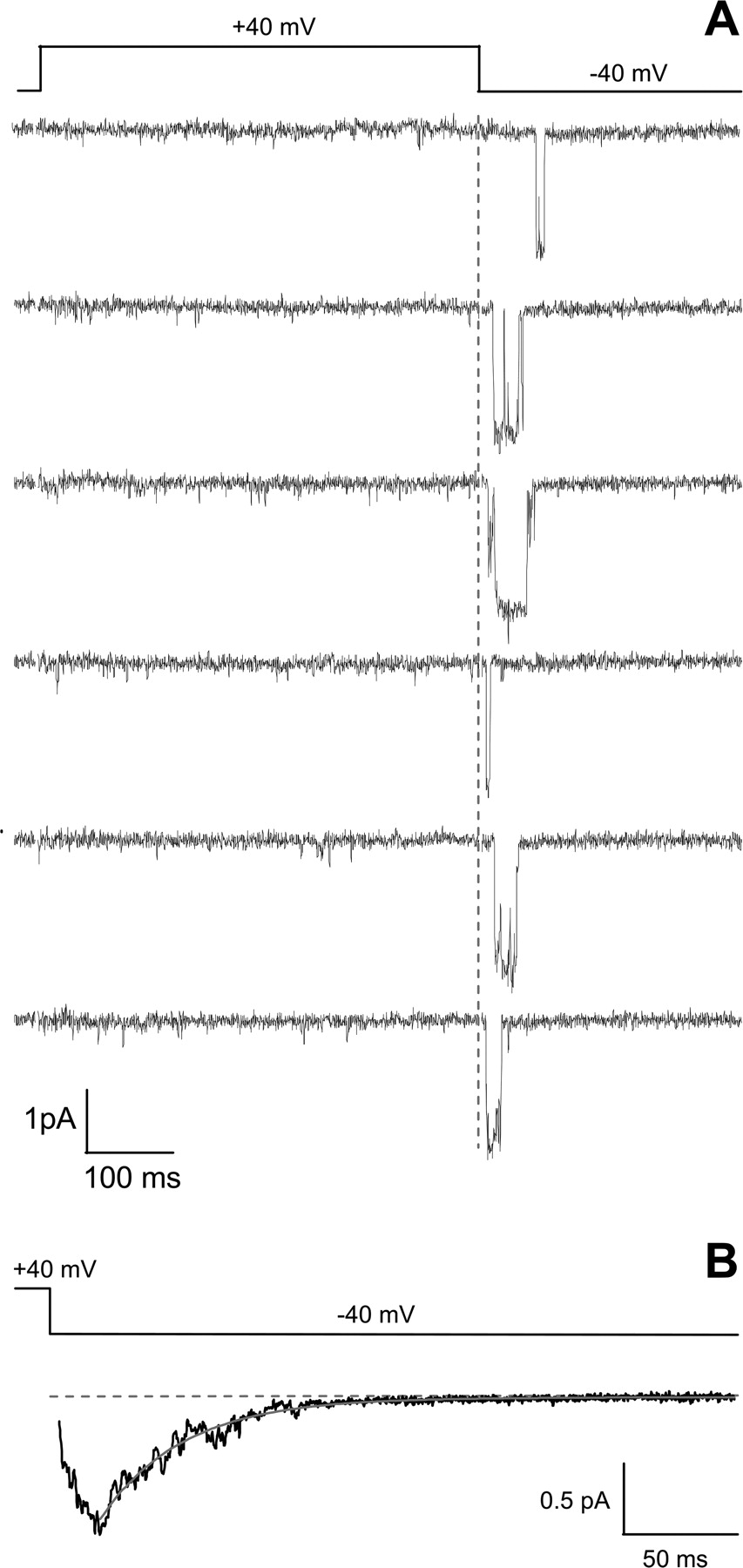 Molecular Nature of Anomalous L-Type Calcium Channels in