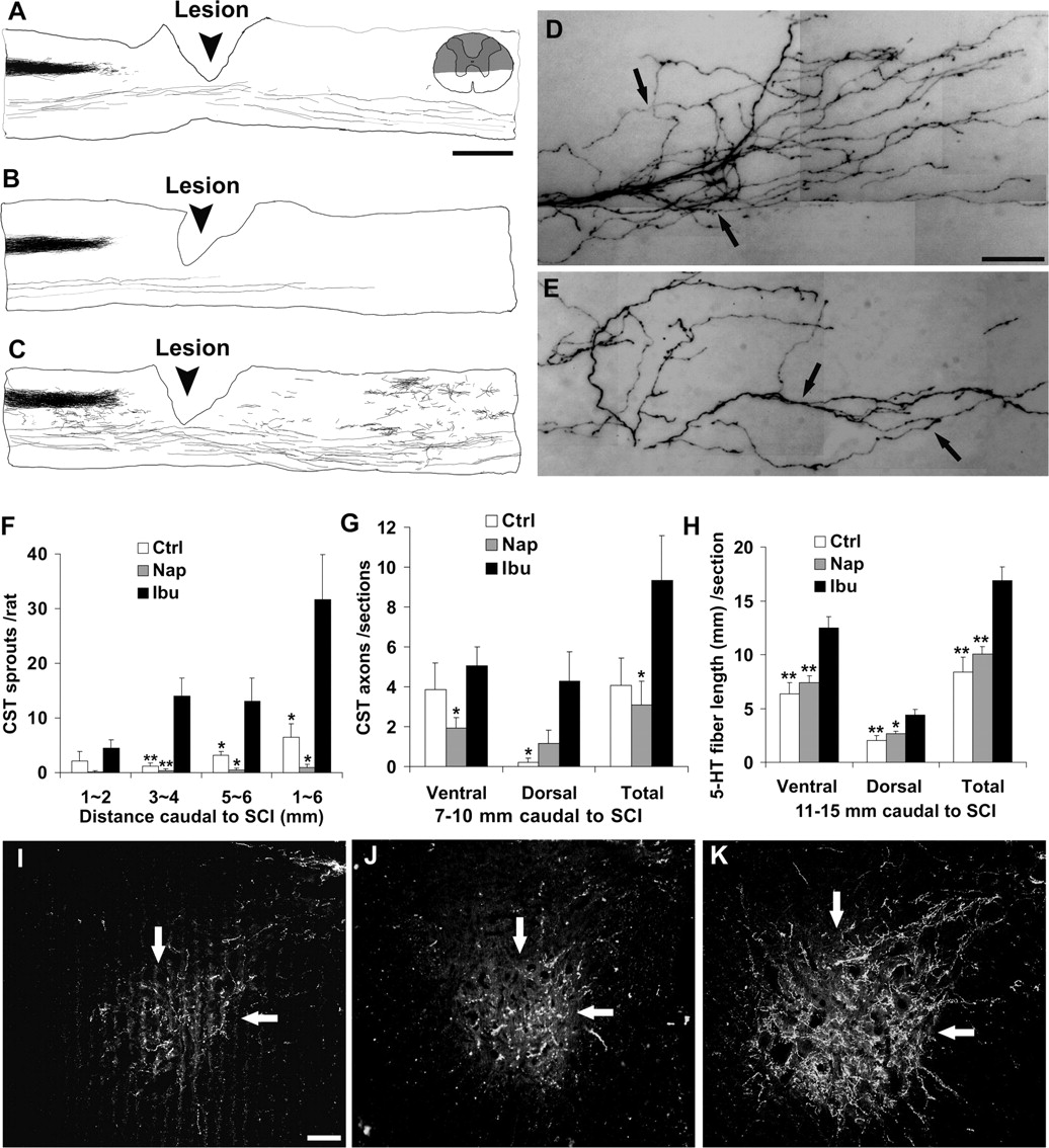 Nonsteroidal Anti-Inflammatory Drugs Promote Axon