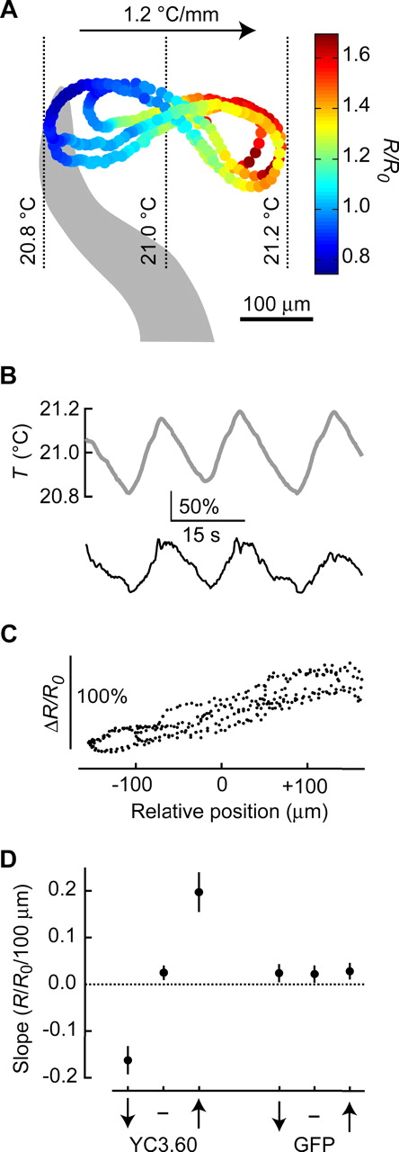 neuronal activation dynamics