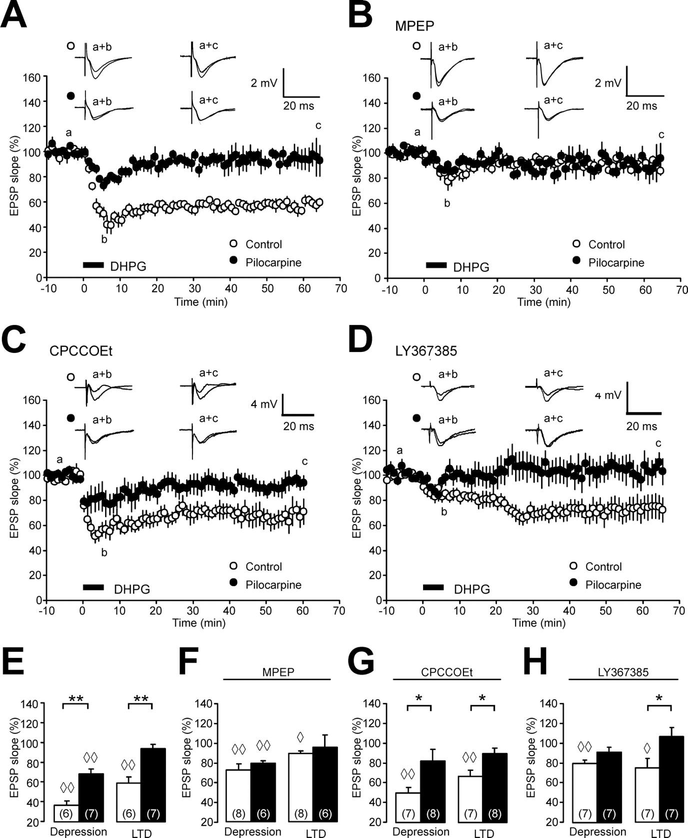 loss of metabotropic glutamate receptor dependent long term