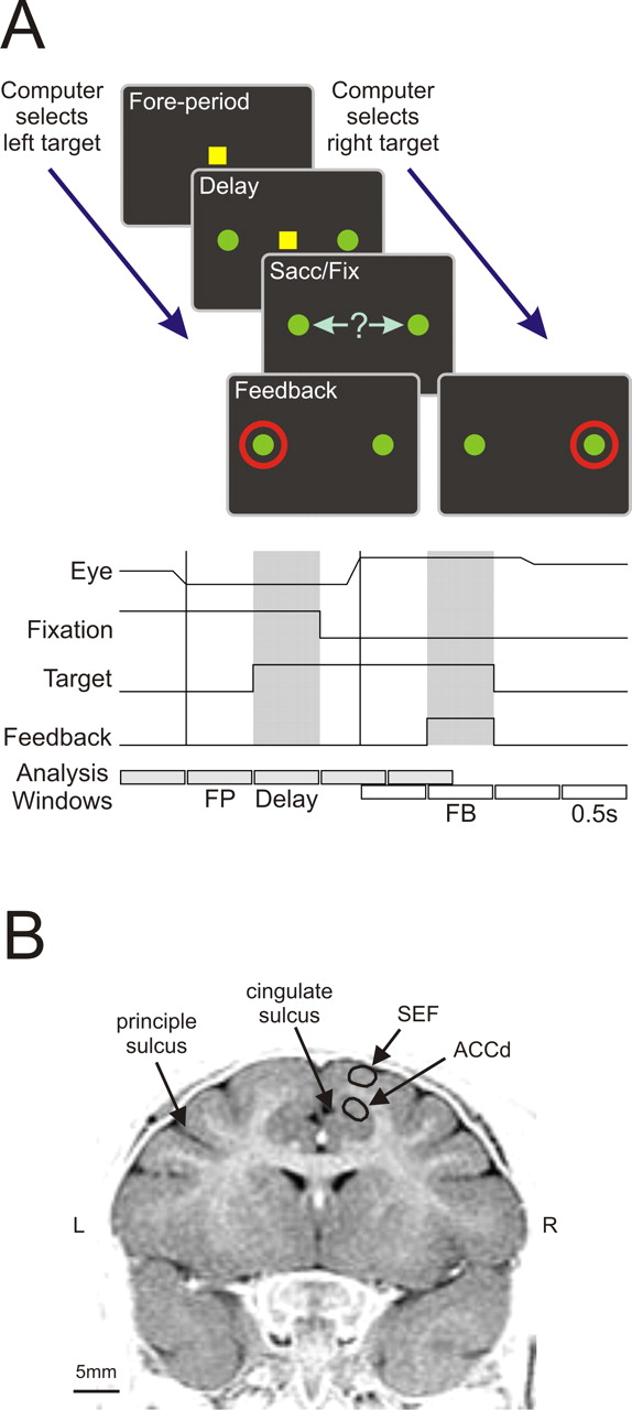 Temporal filtering of reward signals in the dorsal anterior download figure ccuart Gallery