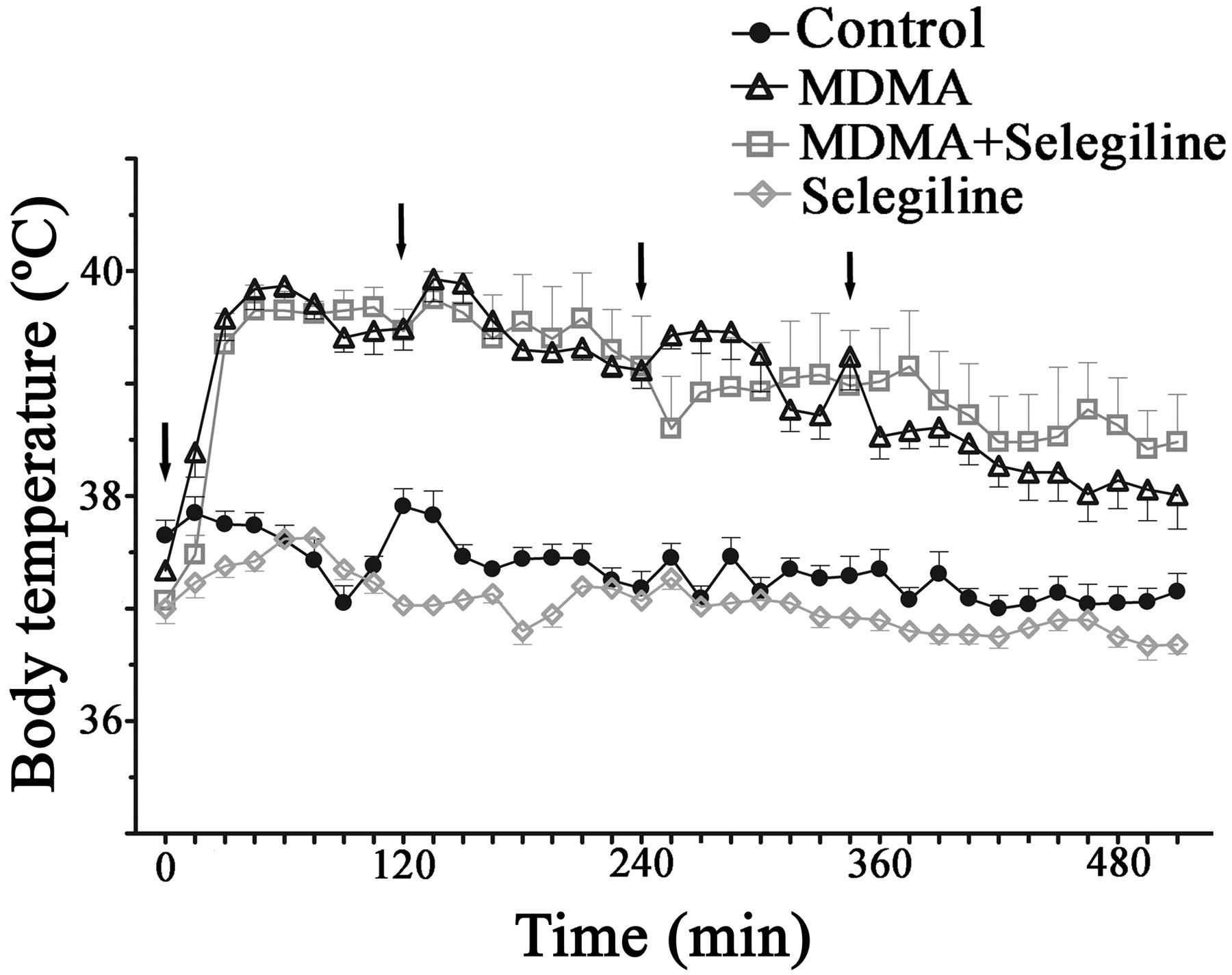 Monoamine Oxidase-B Mediates Ecstasy-Induced Neurotoxic Effects to