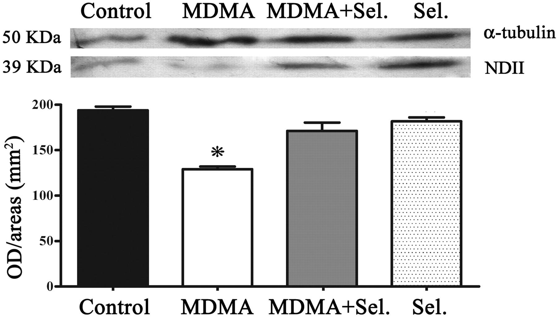 Monoamine Oxidase-B Mediates Ecstasy-Induced Neurotoxic
