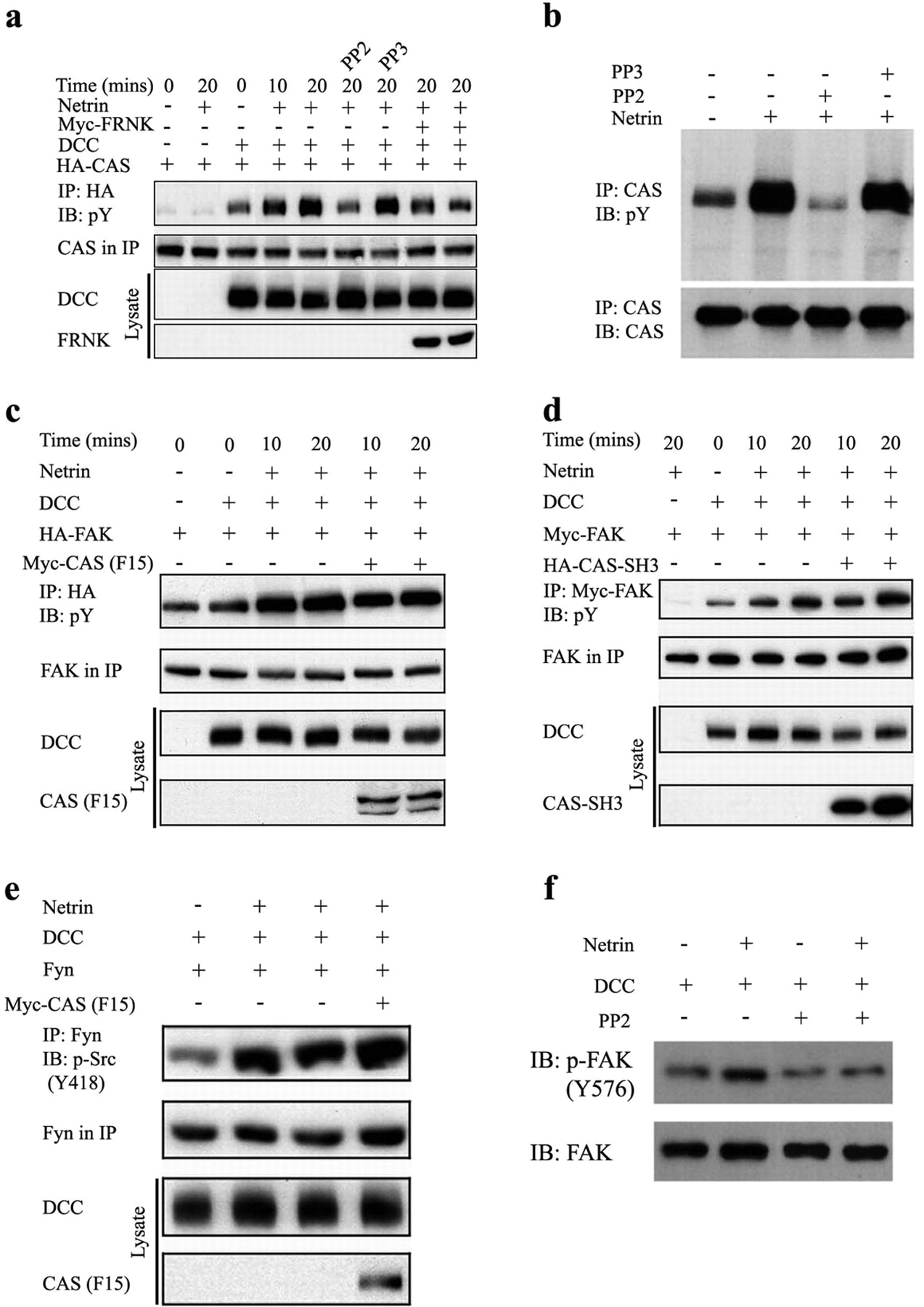 p130cas is required for netrin signaling and commissural axon