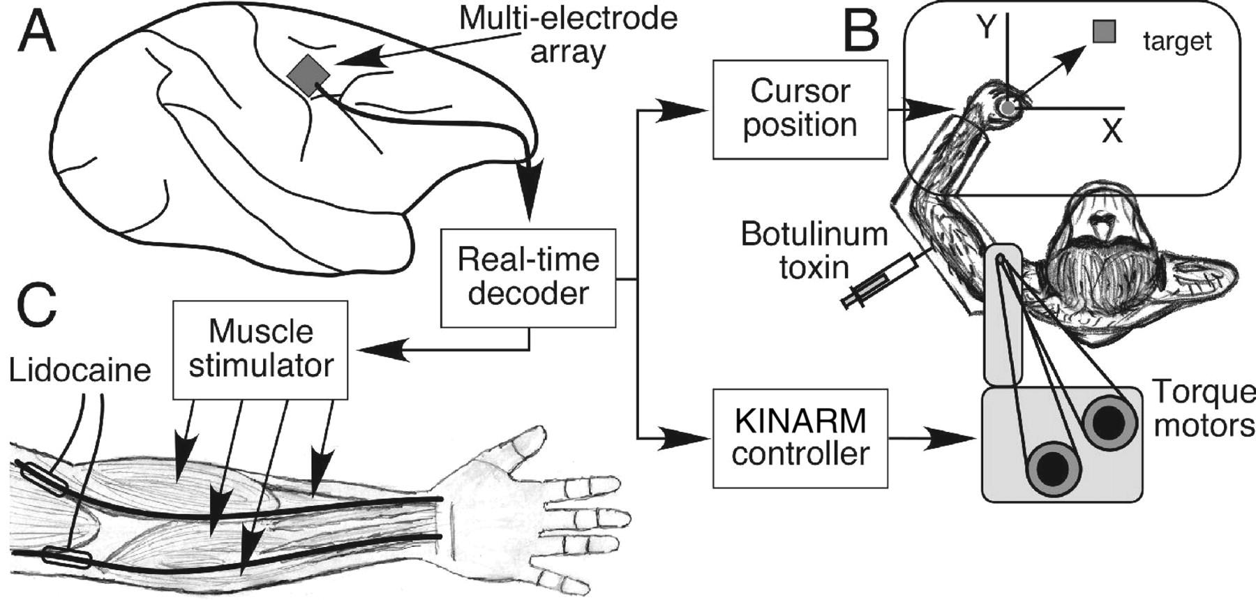 Biomimetic Brain Machine Interfaces For The Control Of Movement Block Diagram Egt Emg Cursor System Eye Gaze Download Figure