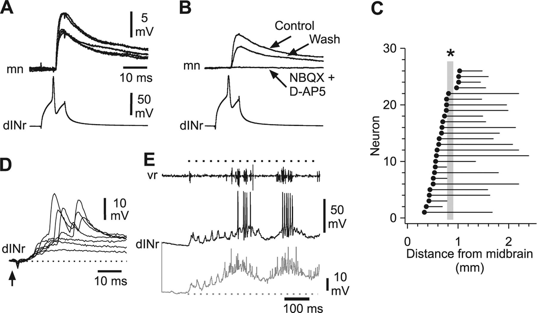 Reconfiguration of a Vertebrate Motor Network: Specific Neuron ...