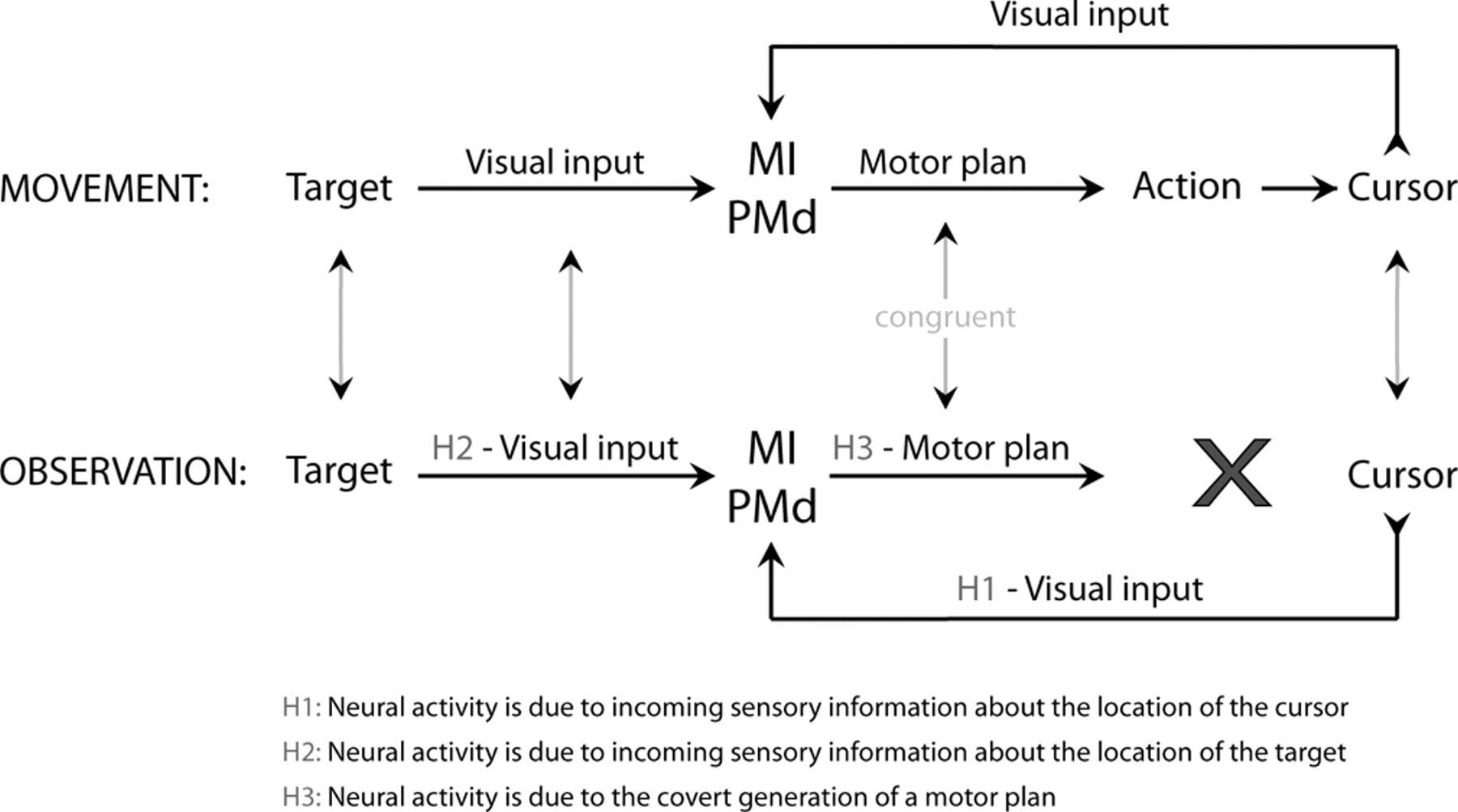 Congruent Activity During Action And Observation In Motor Block Diagram Of The Egt Emg Cursor Control System Eye Gaze Download Figure