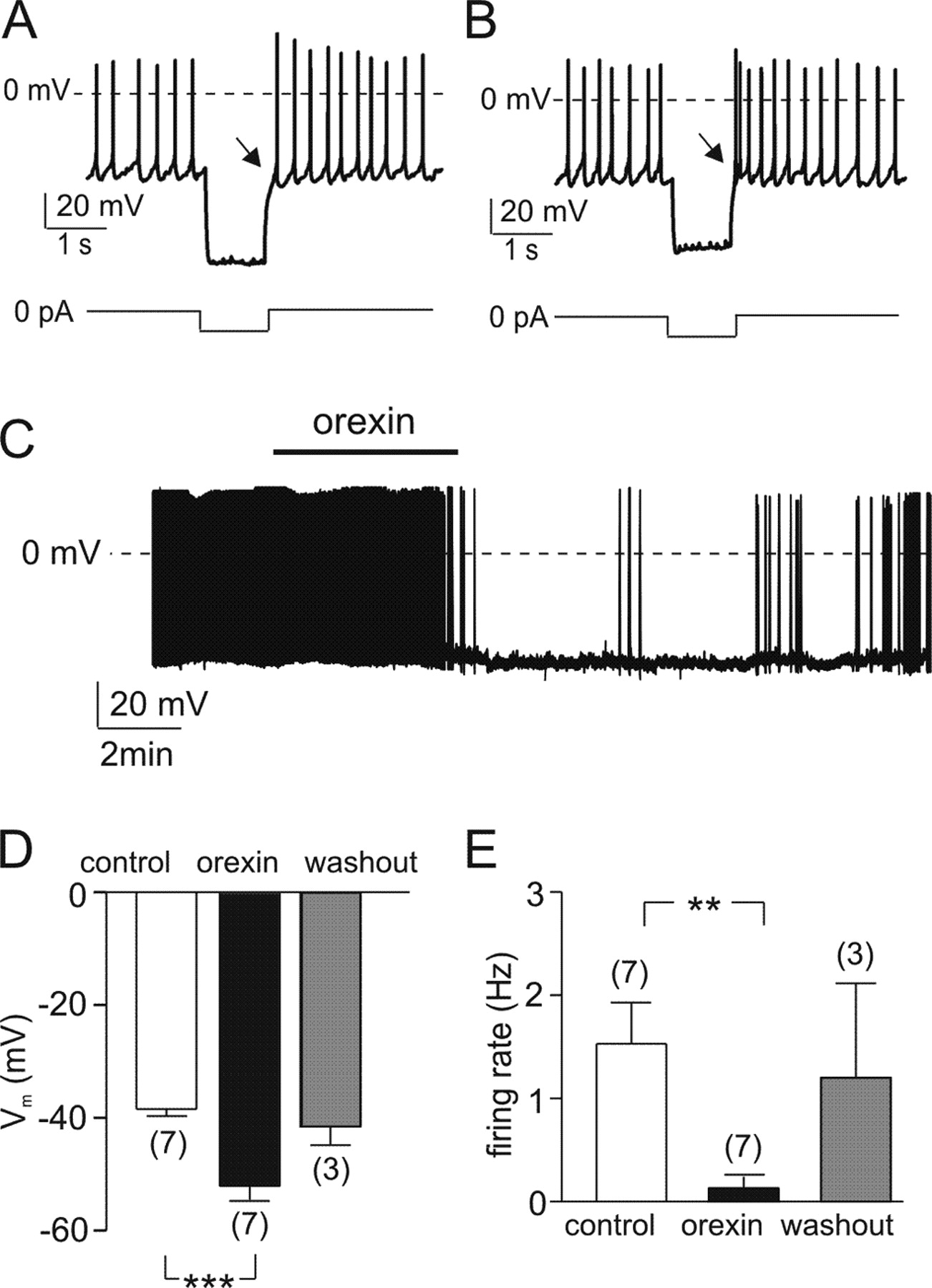 Electrical Inhibition Of Identified Anorexigenic Pomc Neurons By Suzuki Gn 125 Electric Circet Pdf Download Figure