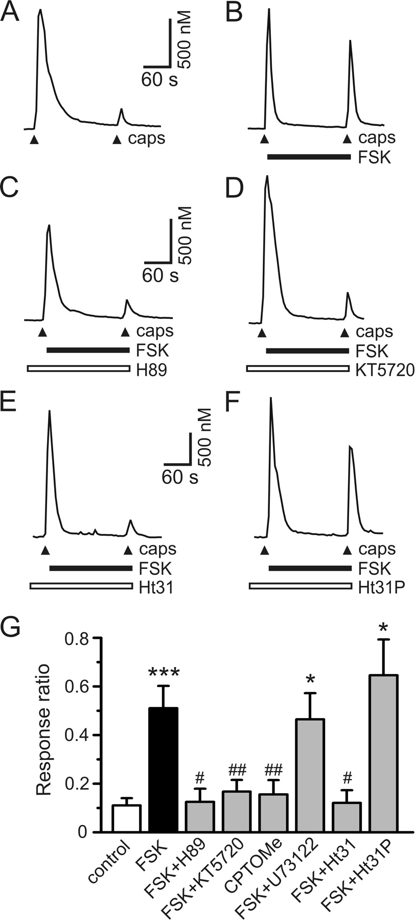 Protein Kinase A Anchoring Via Akap150 Is Essential For Trpv1 Cascade 29 Boat Wiring Diagram Download Figure